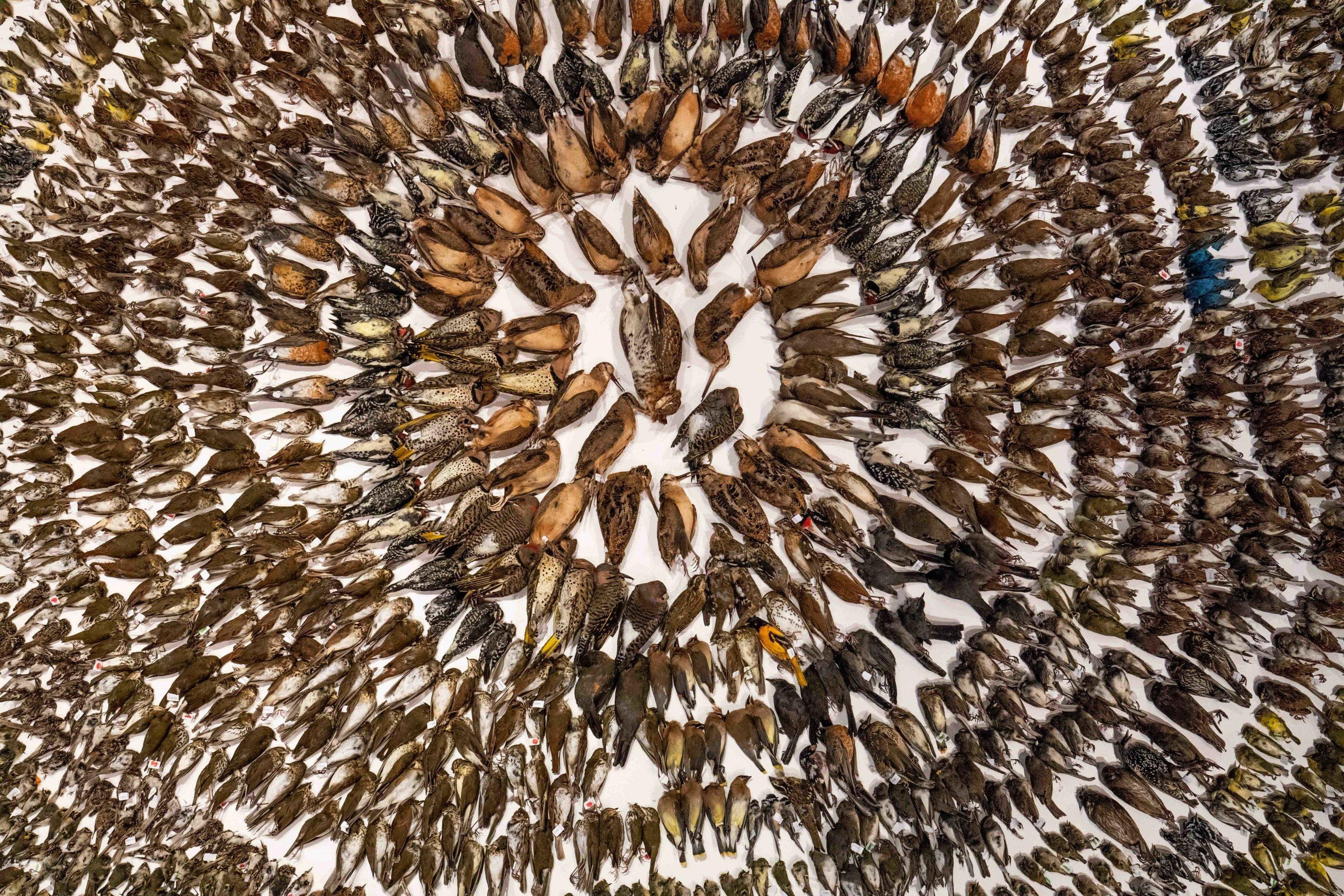 Rund 2000tote Vögel sind in einem kreisförmigen Arrangement auf einer Ausstellungsfläche arrangiert.