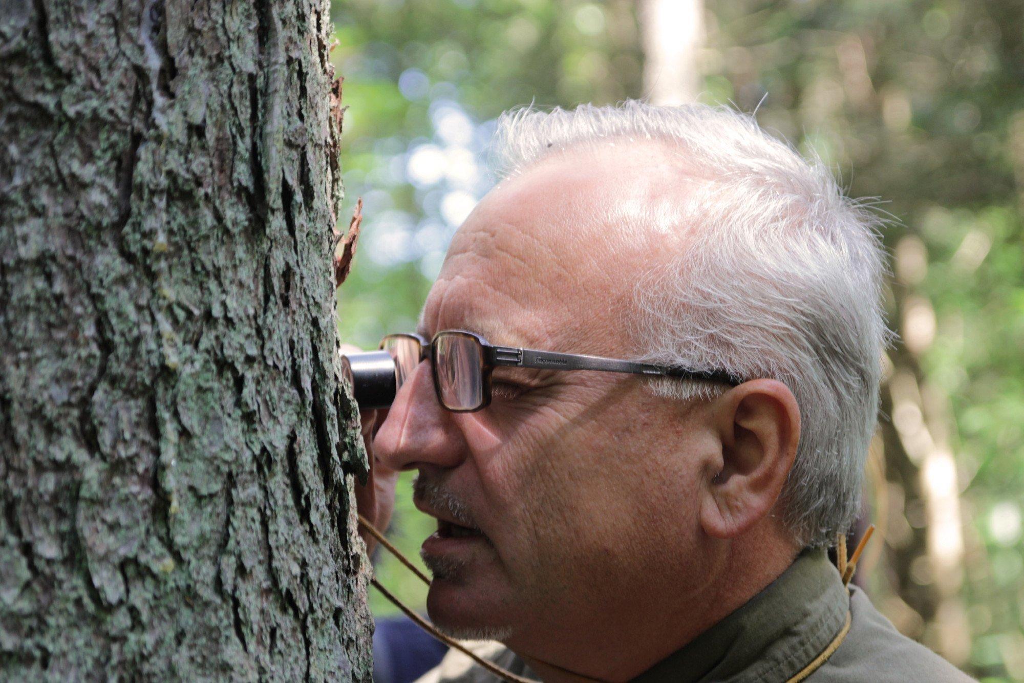 Ein Wissenschaftler steht mit einer Lupe direkt vor einem Baumstamm.