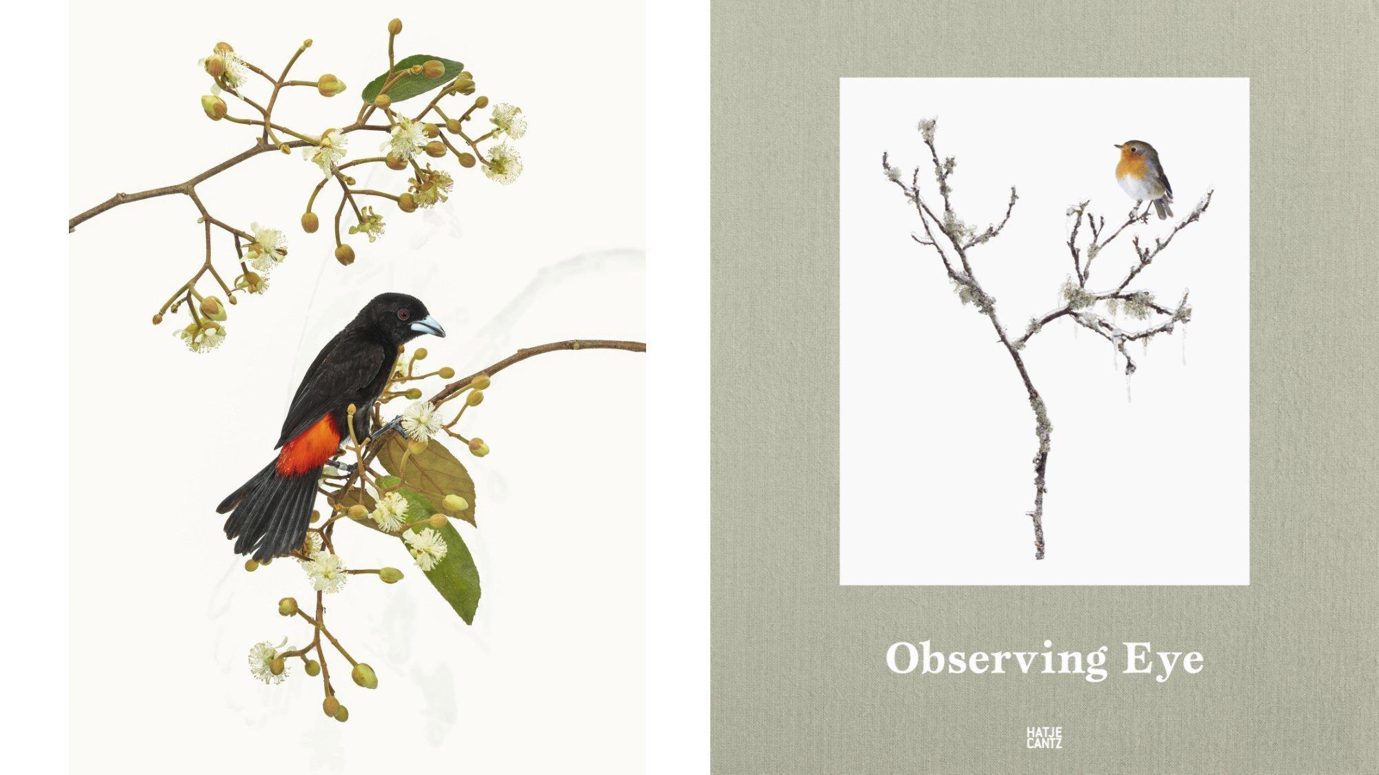 Montage: Links: Eine südamerikanische Tangare sitzt auf einem künstlichen blühenden Zweig. Rechts: Cover des Buchs Observing Eye mit einem Foto eines Rotkehlchens.