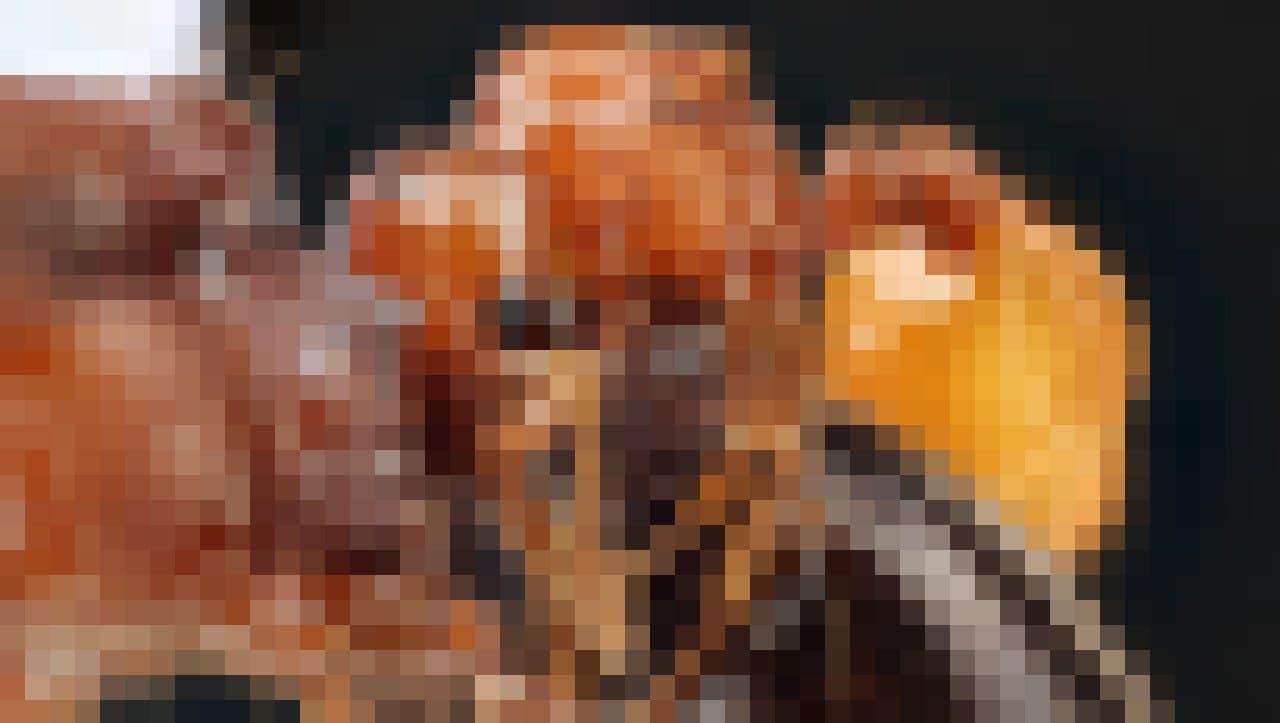 Eine bernsteinfarbene Ameise hält die Taille einer größeren, dunkelbraunen Ameisen umklammert.