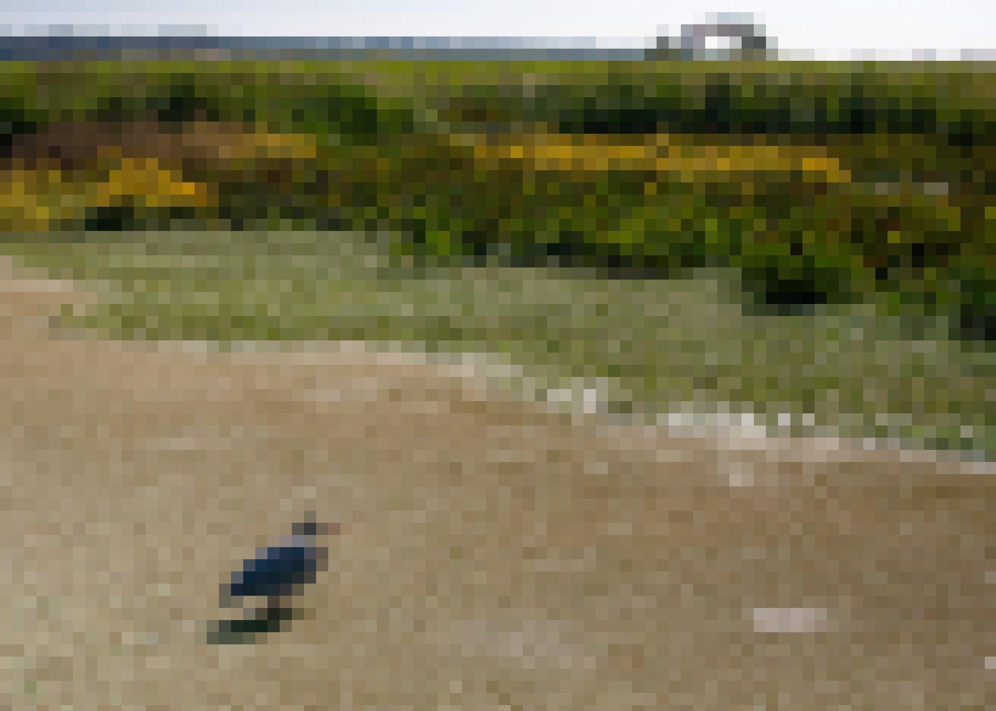 Ein Reiher steht mit eingezogenem Hals in einem Teich, am Rand Wasserpflanzen und gelbe Blüten. Auf dem Deich im Hintergrund spazieren zwei Menschen.