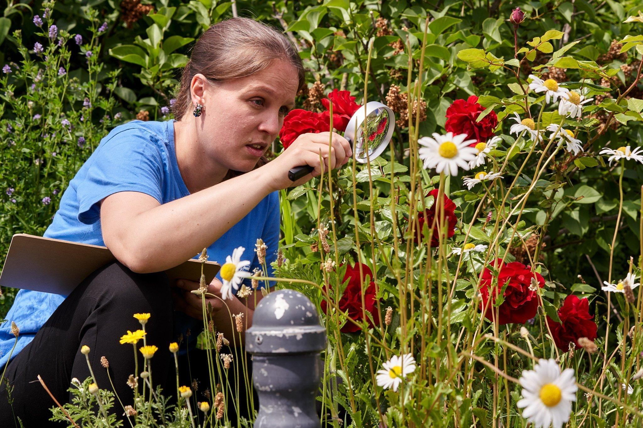 Eine Frau mit braunen Haaren, blauem T-Shirt und schwarzer Hose hockt im hohen Gras zwischen roten Rosen und weiß-gelben Margeriten und betrachtet Insekten durch eine Lupe. Auf dem Oberschenkel liegt ein Klemmbrett.