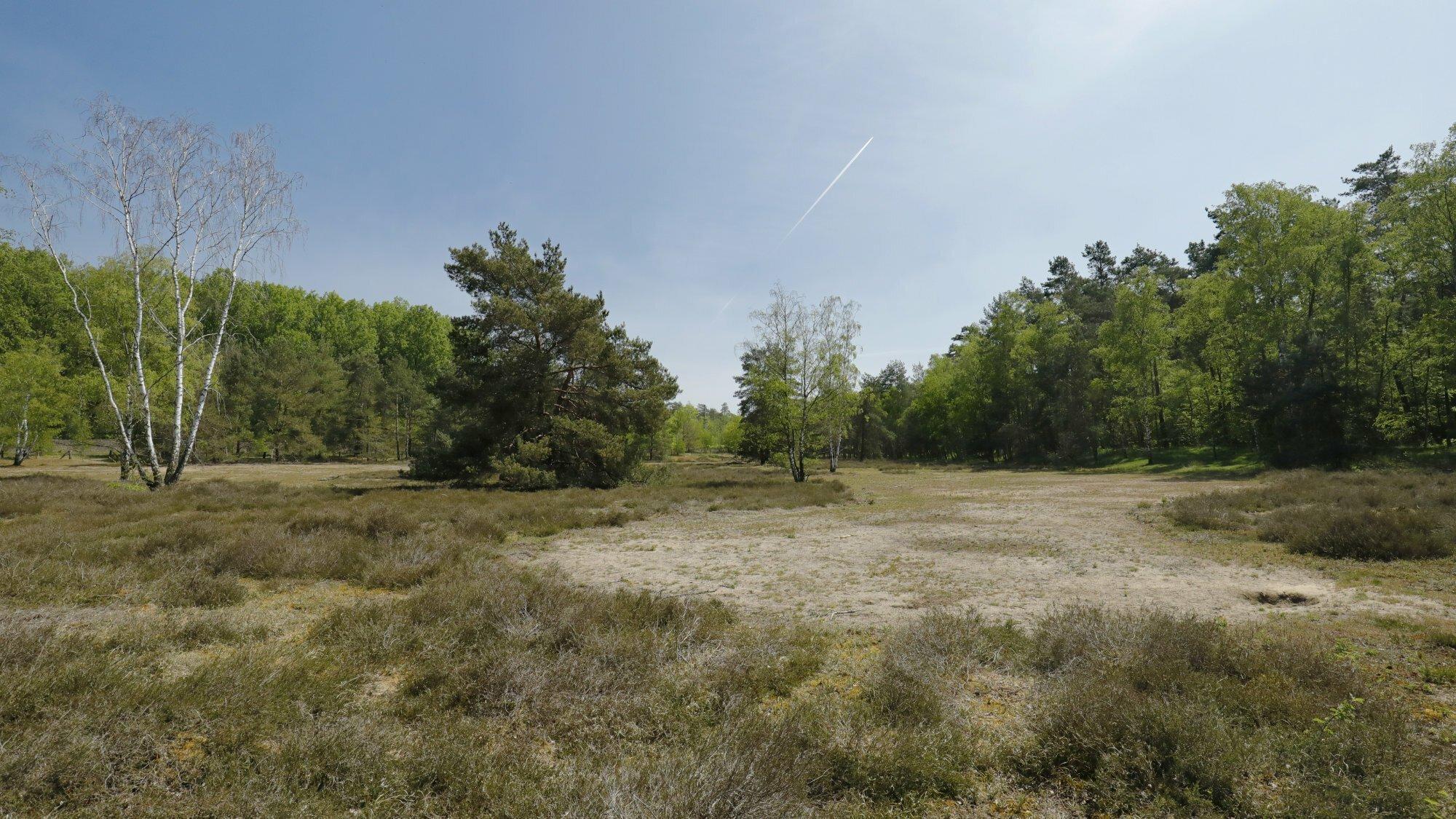 Spärlich bewachsene, trockene Sandfläche, im Hintergrund einzelne Bäume wie Kiefern und Birken, darüber ein blauer Himmel.