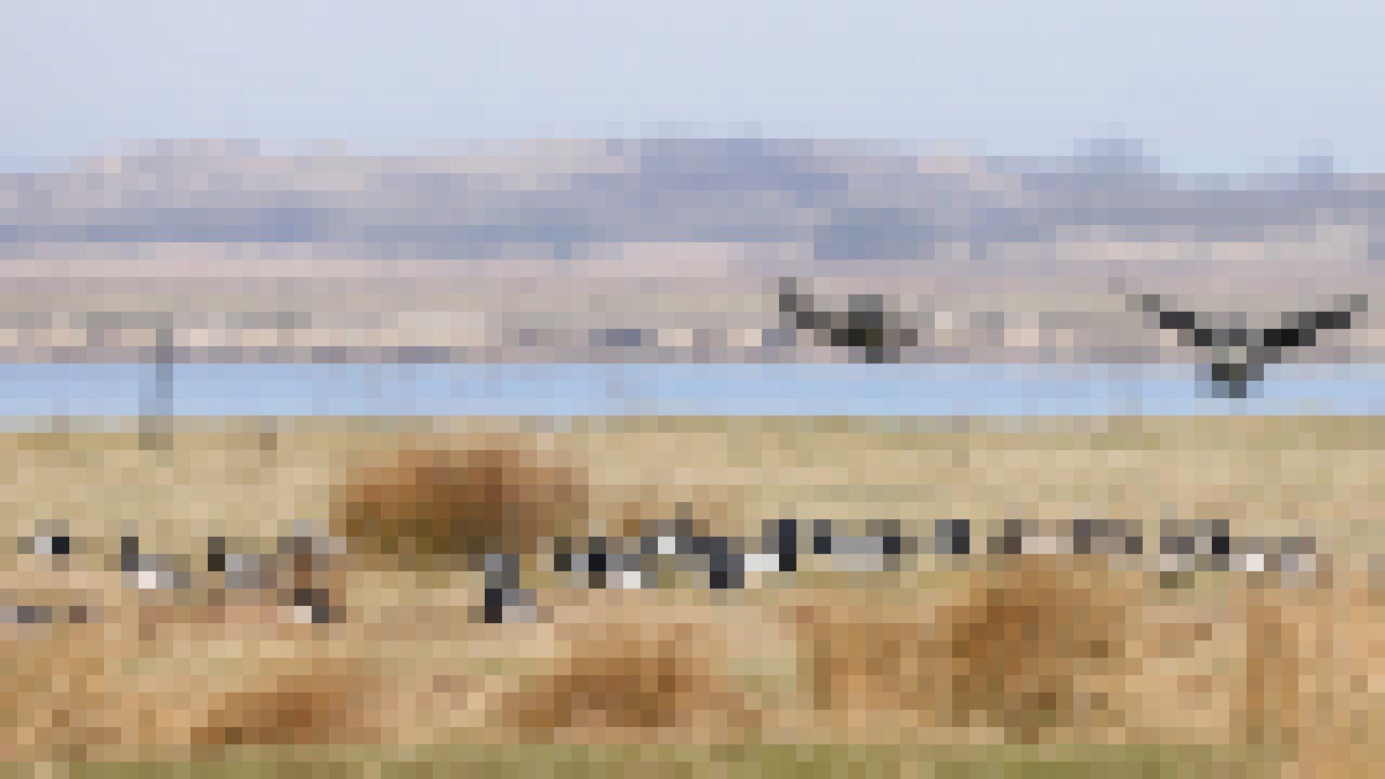 Zwei Gänse mit ausgestreckten Flügeln kurz vor der Landung in einer Gruppe von anderen Gänsen. Im Hintergrund ein Gewässer und eine Düne.