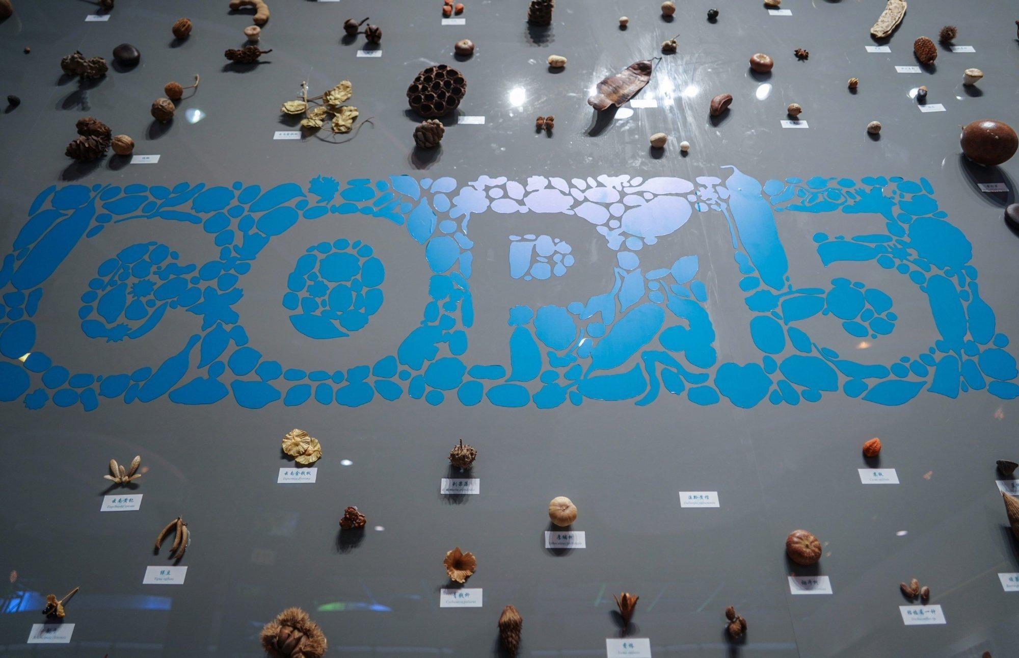 Eine künstlerische seed wall in Kunming