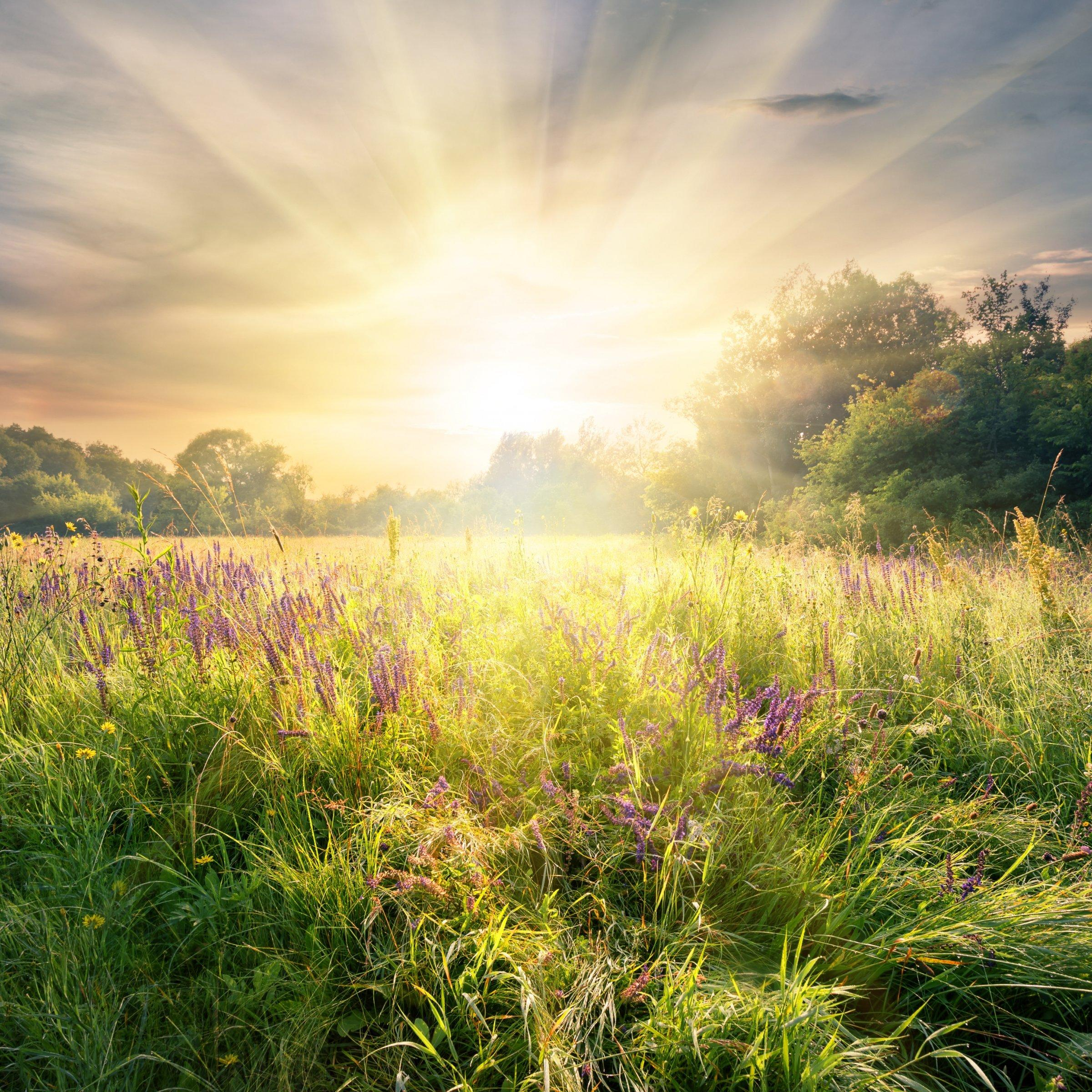 Meadow with wildflowers under the bright sun. Summer landscape.