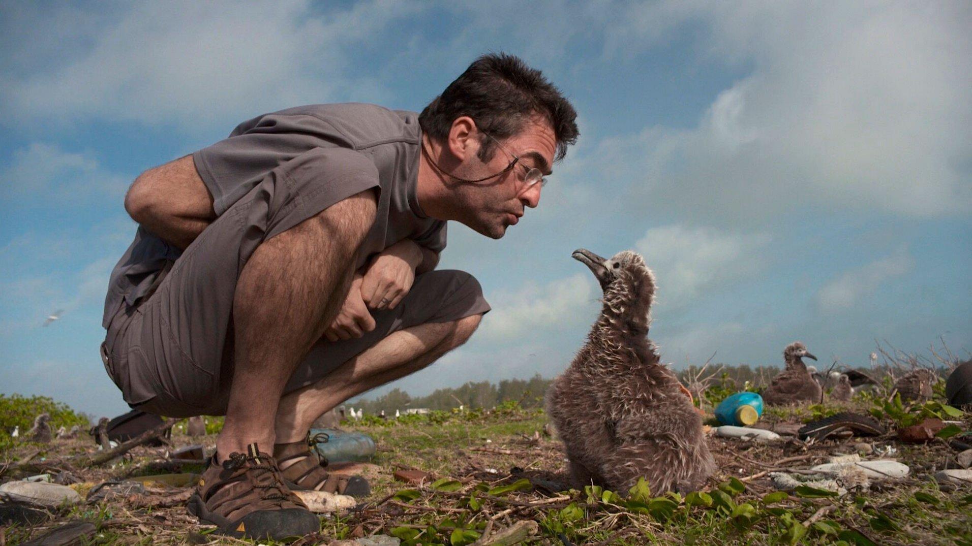 Chris Jordan hockt vor einem Albatros-Küken.