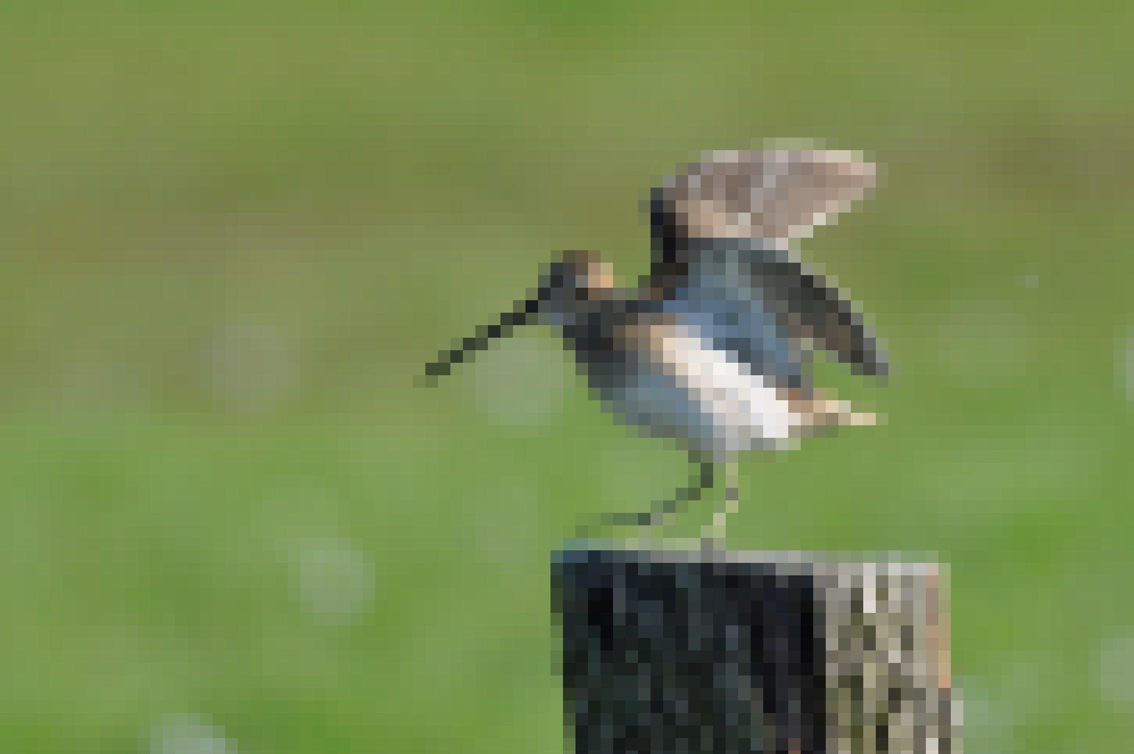 Eine Bekassine sitzt auf einem Zaunpfahl, der auf einer Wiese steht. Sie hat die Flügel ausgebreitet, um sich zum Balzflug zu erheben
