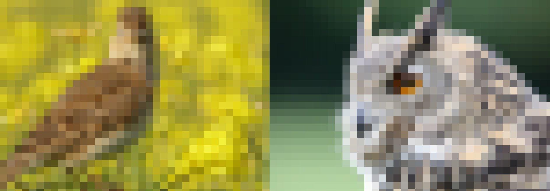 Diese Fotomontage zeigt links eine Lerche und rechts eine Eule.