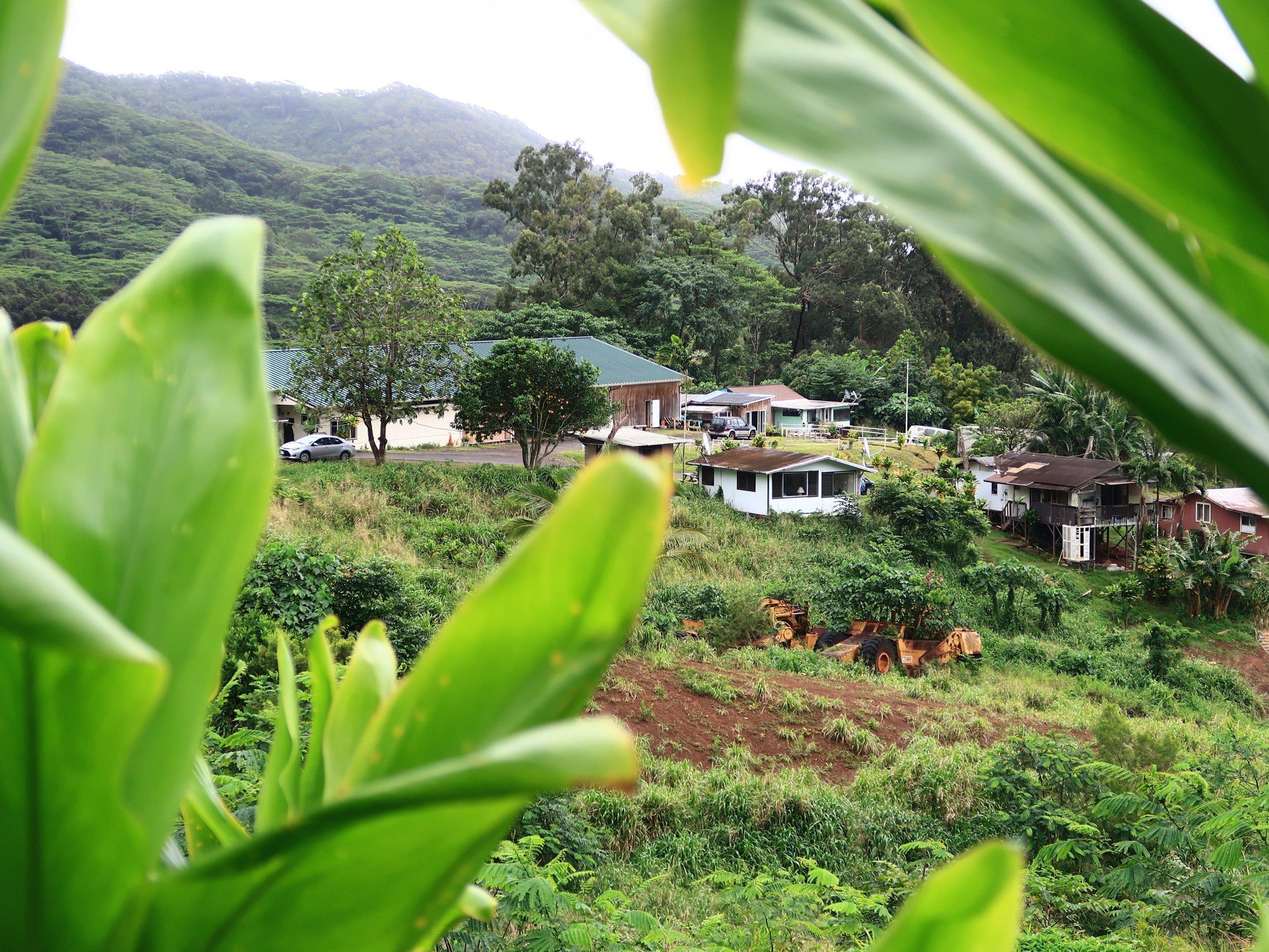 Blick auf Häuser in tropischer Landschaft
