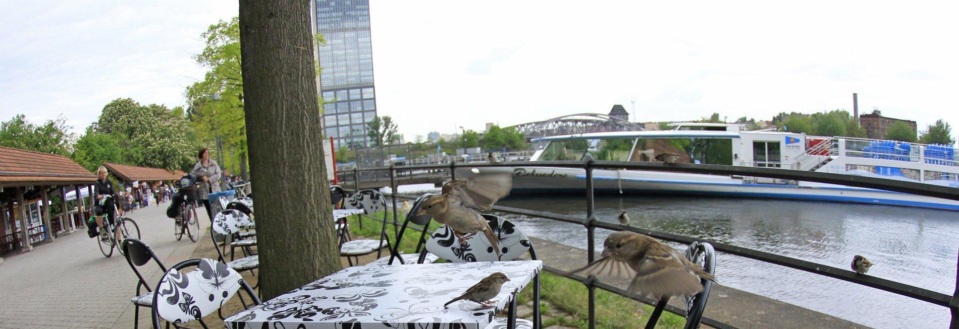 Mehrere kleine Vögel sitzen af Stühlen und an einem gedeckten Restauranttisch, an dem keine Menschen sitzen. Im Hintergrund sieht man einen Fluss und einen Weg mit einigen Personen.