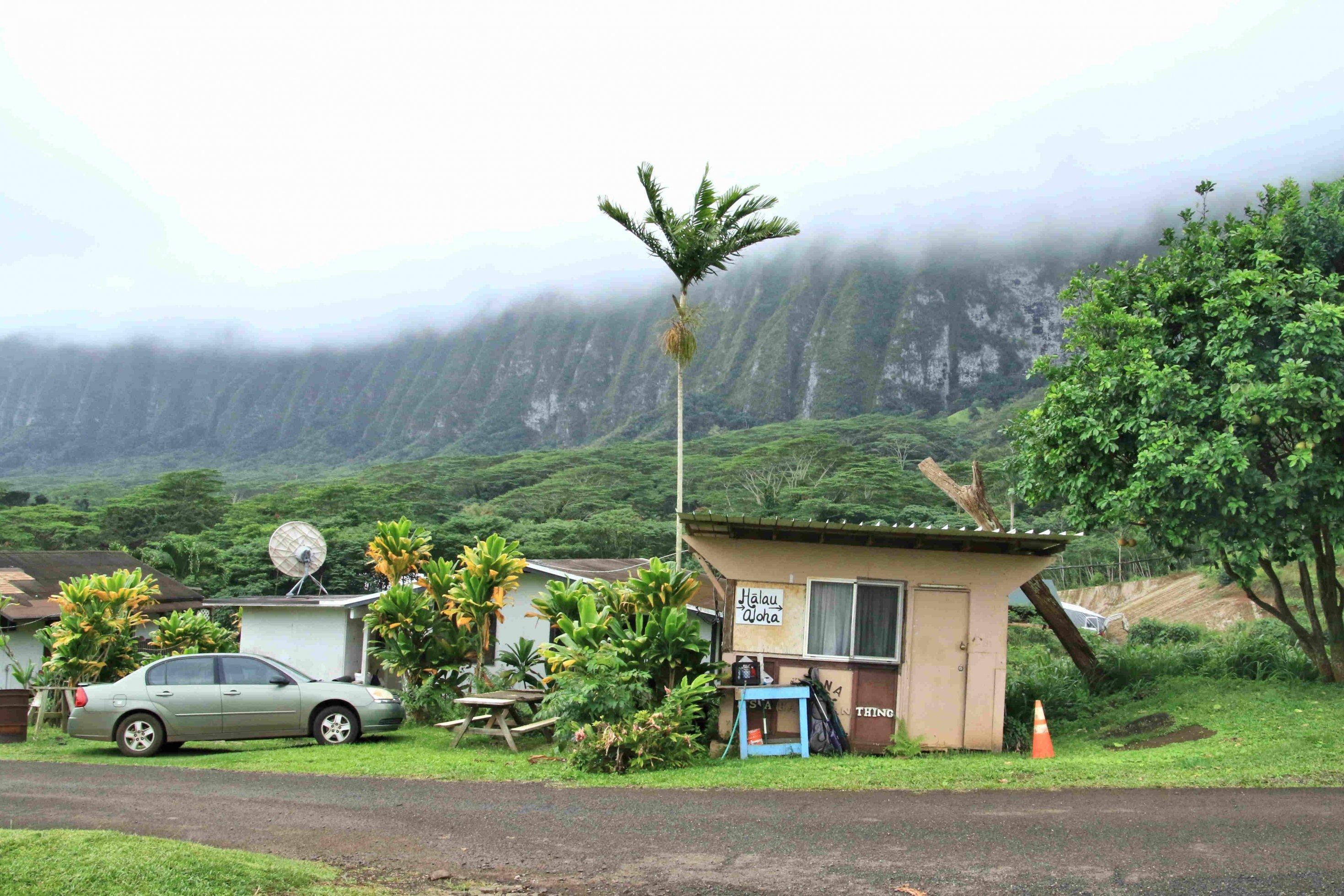 Eine kleine Hütte vor einer Palme und nebeligen Bergen.