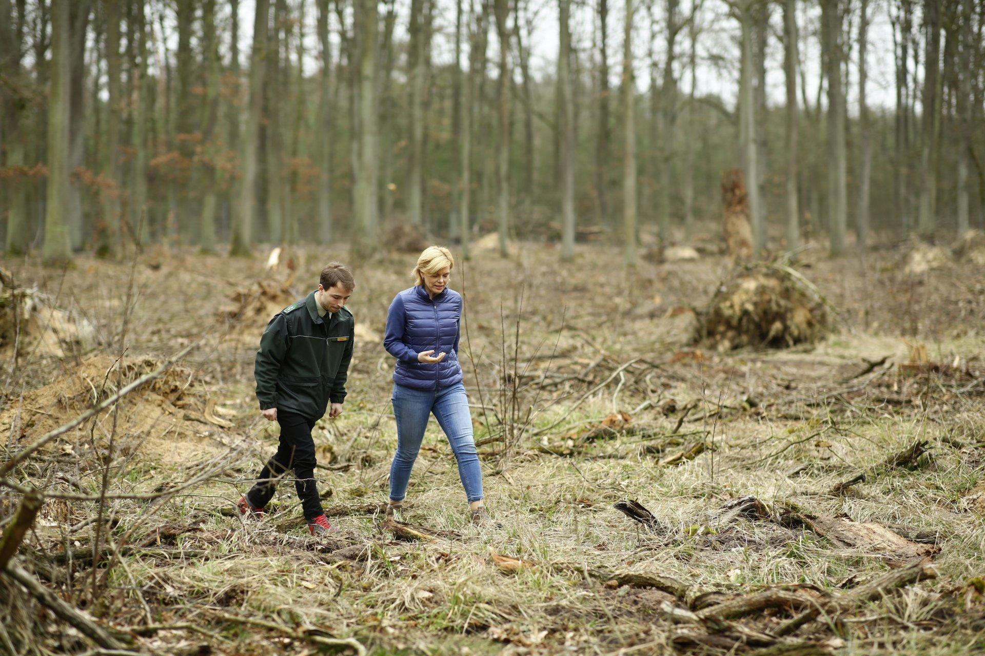 """Julia Klöckner stapft mit einem Forstbeamten über eine Lichtung mit viel Bruchholz und umgestürzten Bäume. Als Landwirtschaftsministerin ist die CDU-Politikerin für den Wald zuständig. Im März 2019besichtigte sie die Baumschäden in Brandenburg, die Stürme, Dürre und Borkenkäfer ausgelöst haben. Auf der Homepage ihres Ministerium ist dann diese Erkenntnis zu lesen: """"Wir müssen unsere Wälder aufforsten und langfristig an den Klimawandel anpassen."""""""