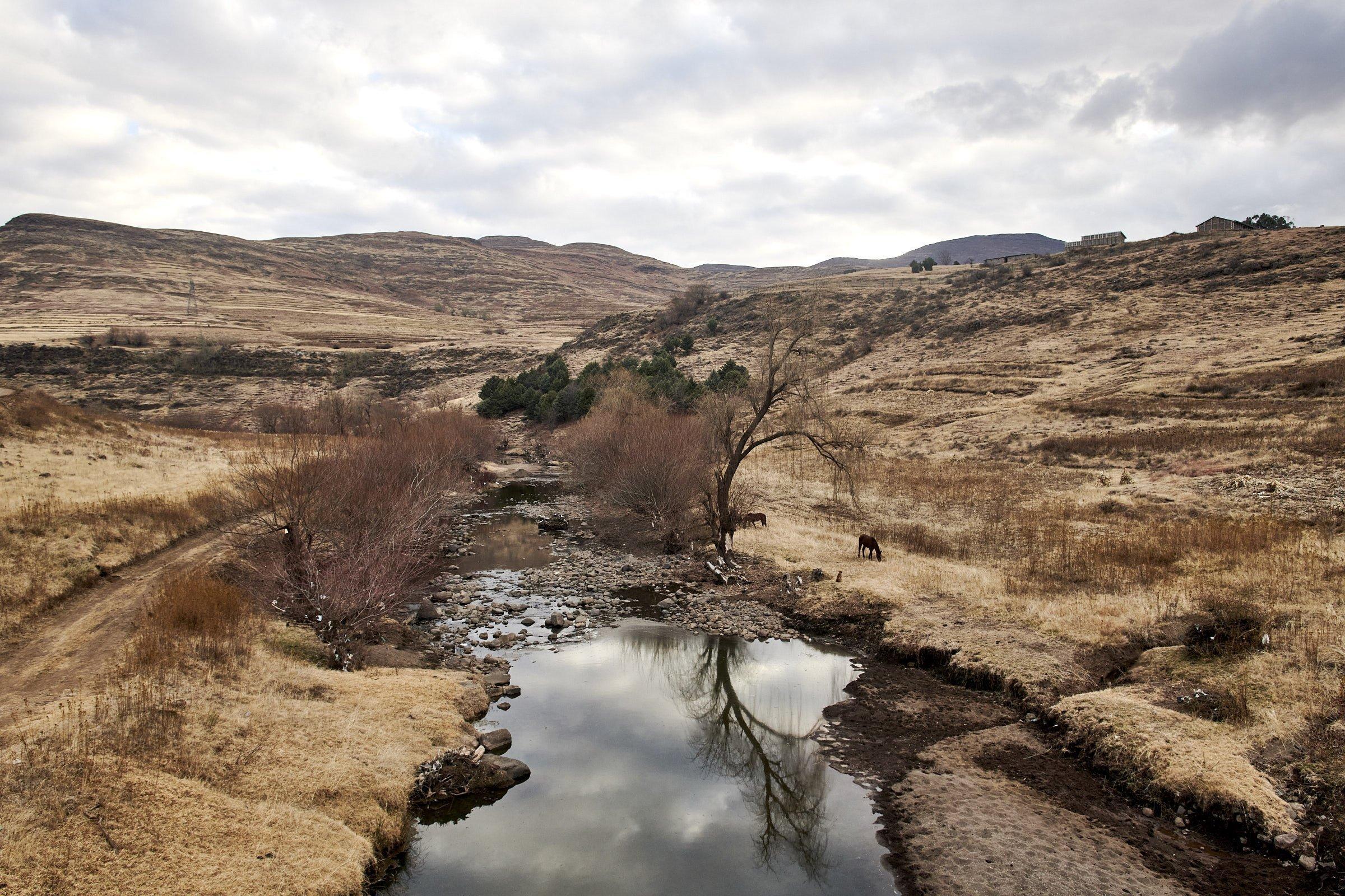 Ein Fluss fließt durch die fahle Graslandschaft, am Ufer ein paar Pferde und Bäume