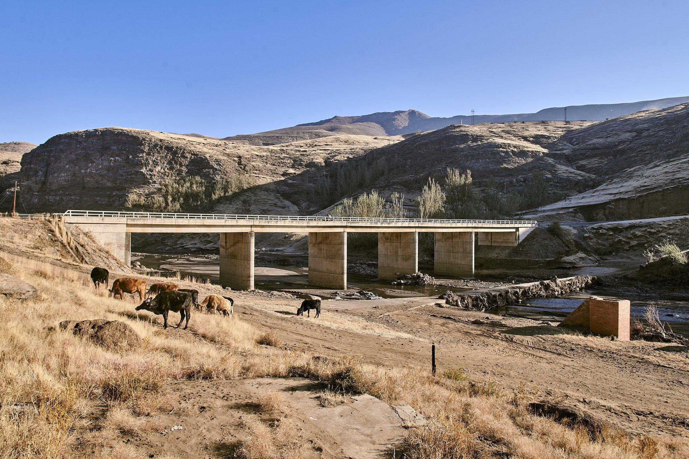 Eine Betonbrücke führt über den Senqu-Fluss, am Ufer grasen Kühe