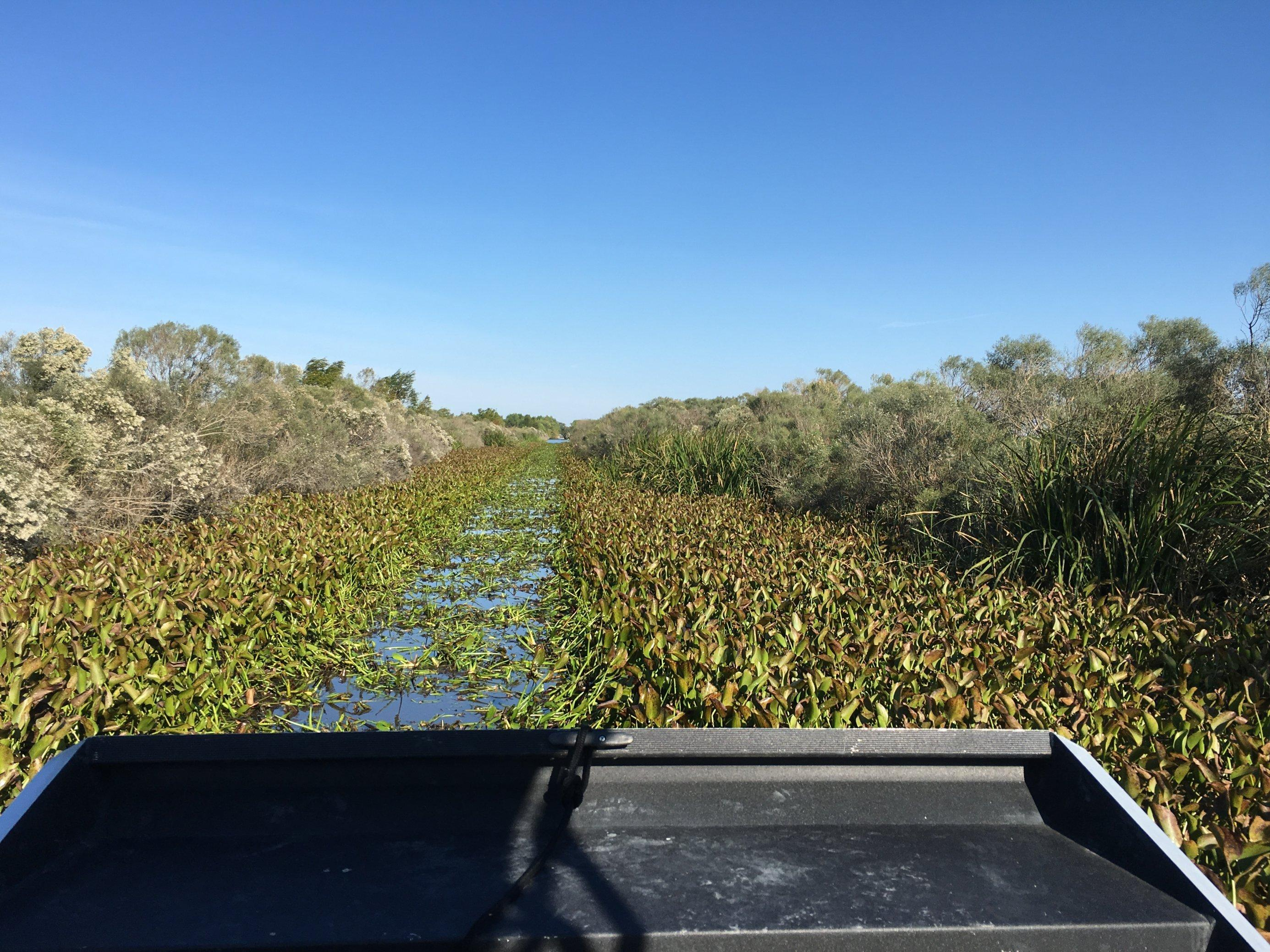 Auf in den Sumpf – per rasantem und lautem Düsen-Boot