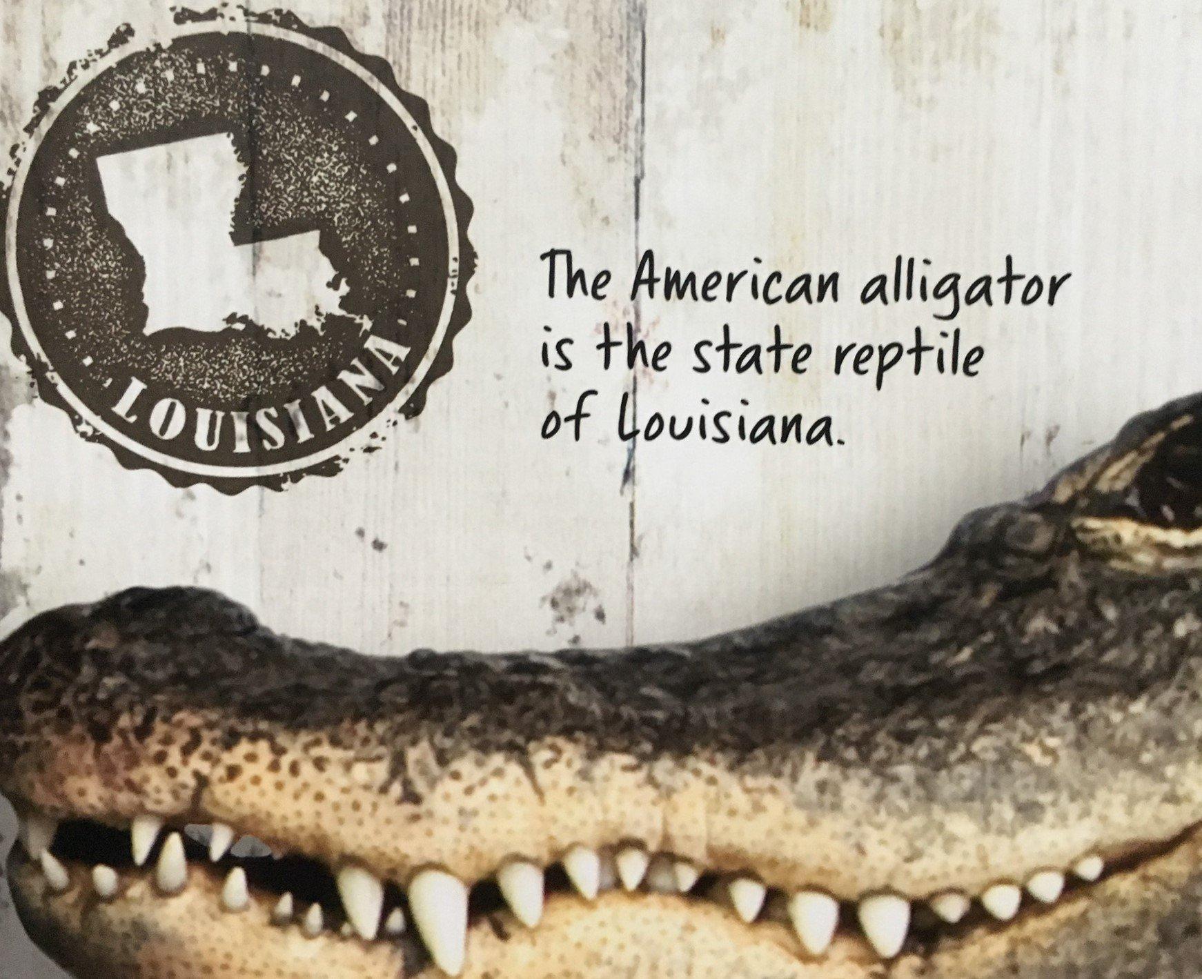 Auf Fahnen und Stempeln: der Alligator ist das Wappentier von Louisiana