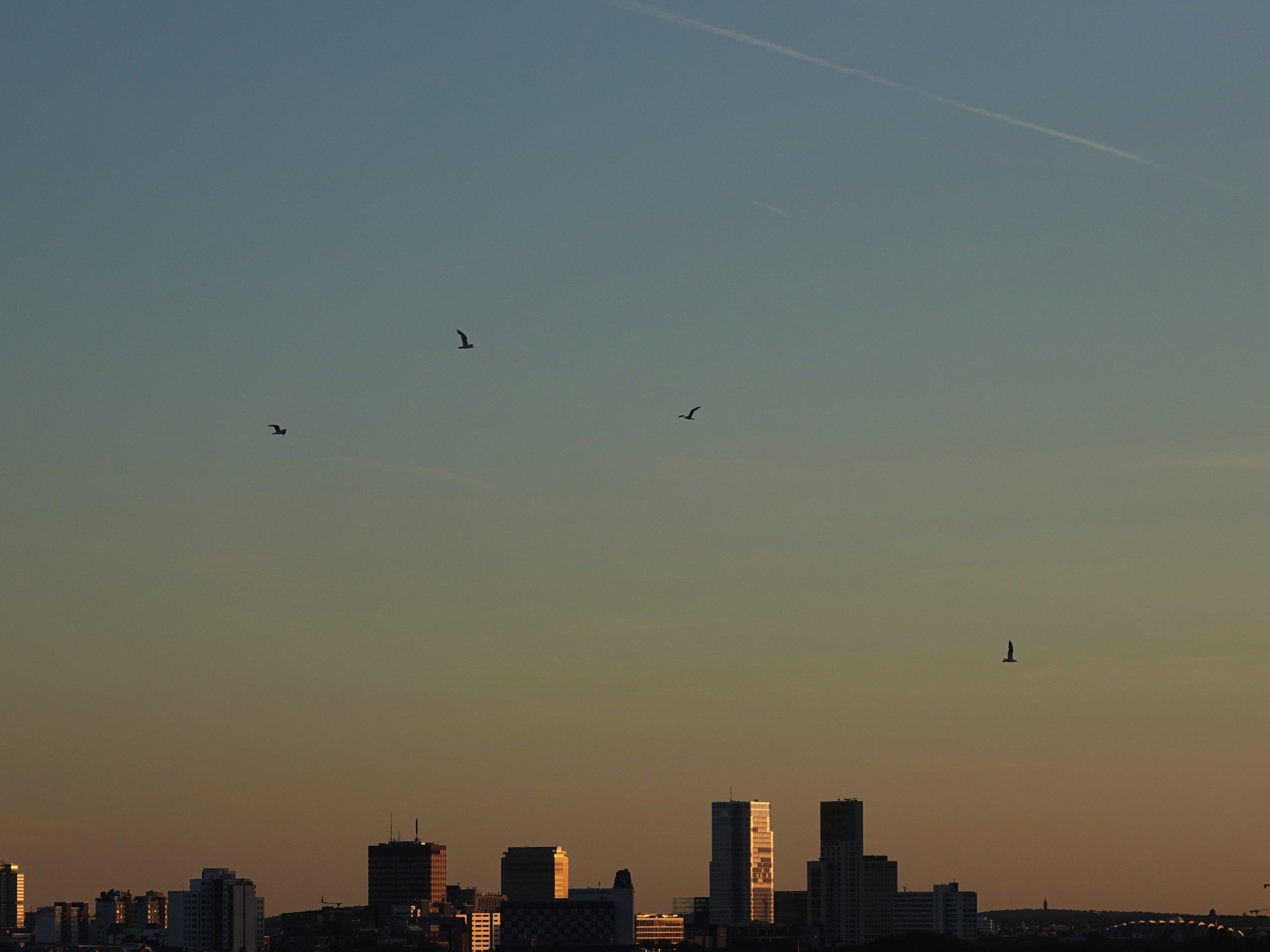 Blick auf die City West mit Möwen: Die Stadt entwickelt sich immer stärker zum Refugium für Wildtiere.