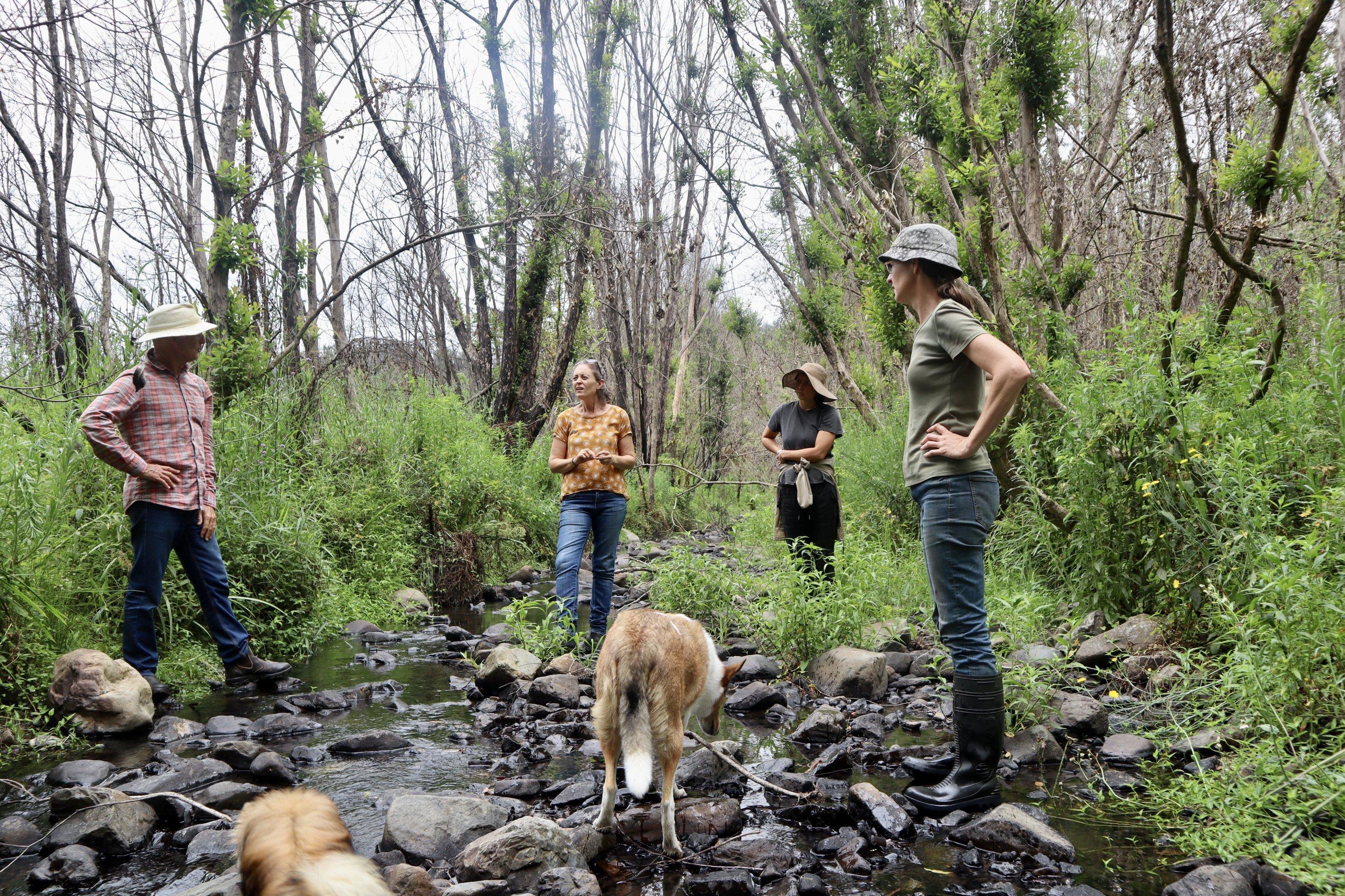 Drei Nachbarïnnen und ein Hund begutachten im Oberen Pappinbarra Tal in New South Wales einen kleinen Bachlauf auf dem Grundstück von Angela Frost. Ein Jahr nach dem Feuer sprießt wieder Grün, es sind allerdings andere Pflanzen als vor dem Feuer..