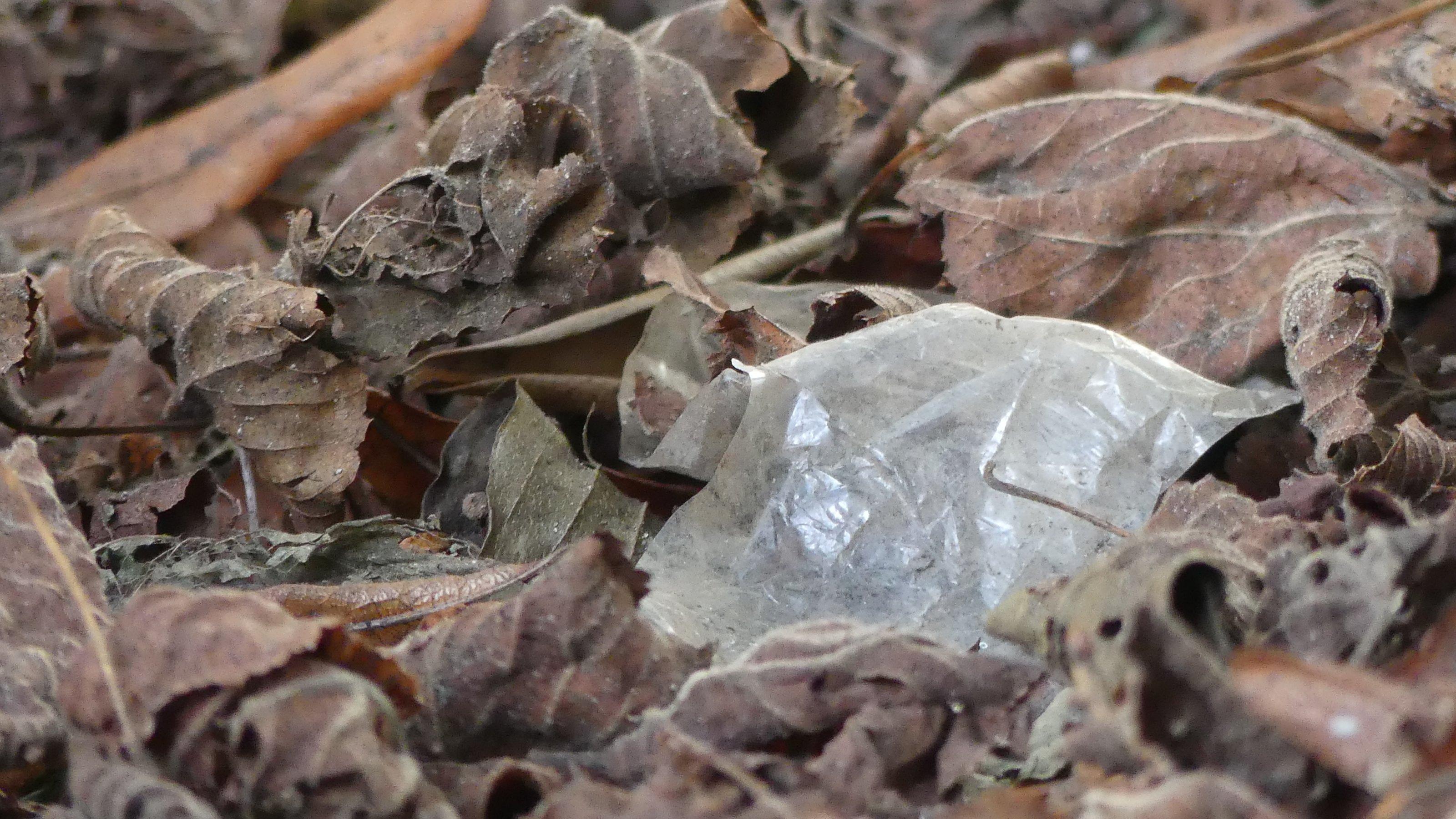 Ein Teil durchsichtiges Plastik zwischen braunem Laub.