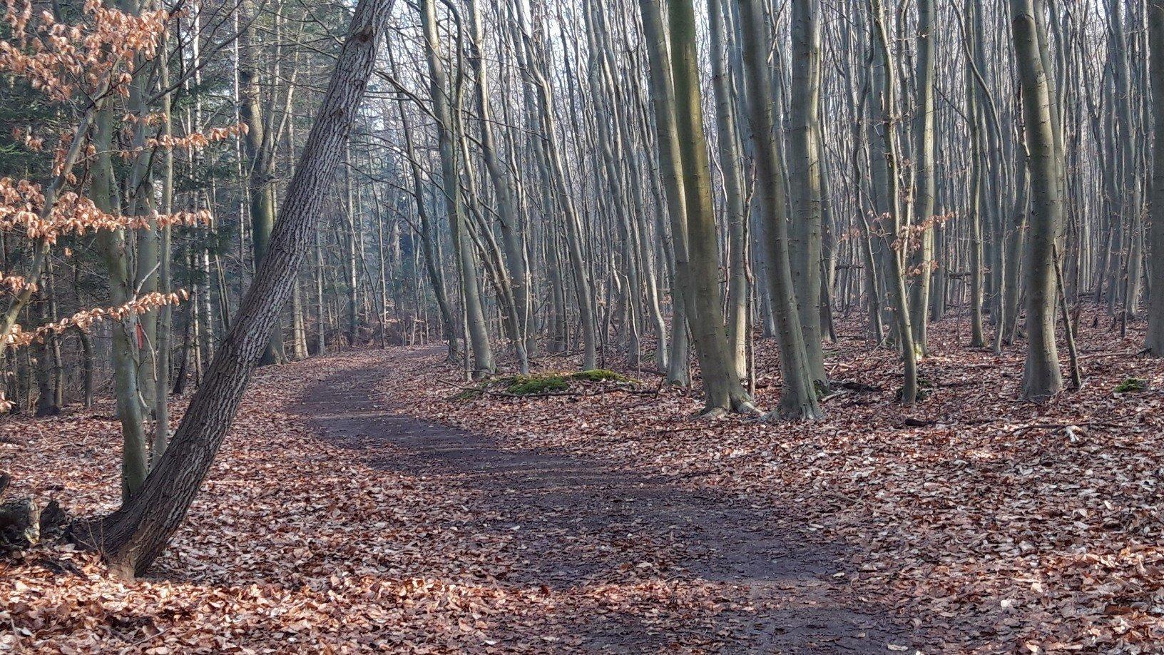 idyllischer Waldweg im Spätwinter
