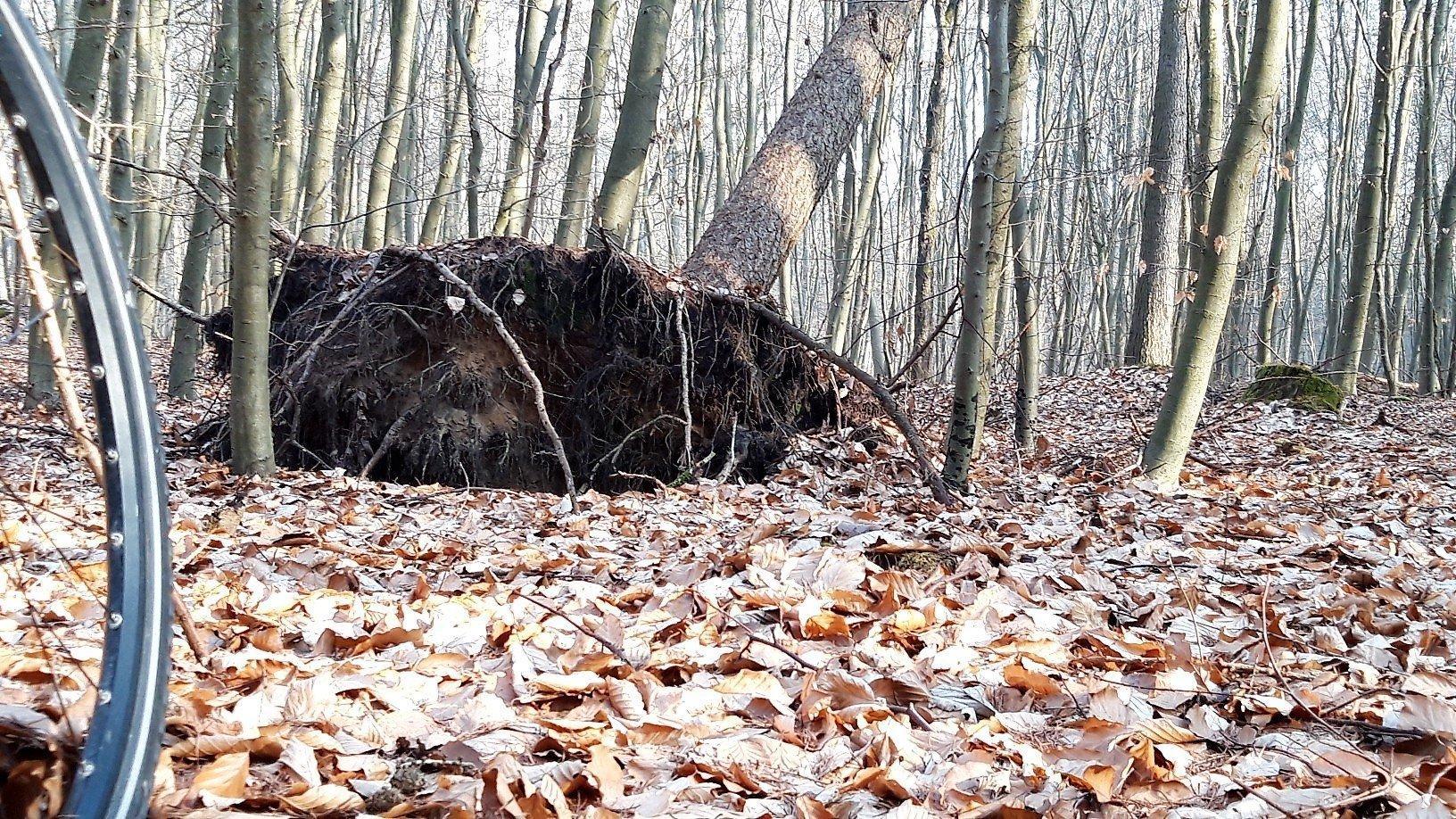Mitten im Wald endet die Radroute vor einem halb umgestürzten Baum