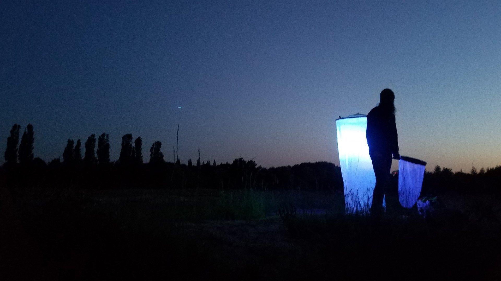 """Timo Zeimet, Student der Biologie, bei Nacht auf dem """"Energieberg"""" in Hamburg-Georgswerder. Er steht vor einem sogenannten """"Leuchtturm"""", einer mit Gaze umhüllten, in einem rund zwei Meter hohen Gestell aufgehängten Lampe, mit der er Nachtfalter anlocken und bestimmen will."""