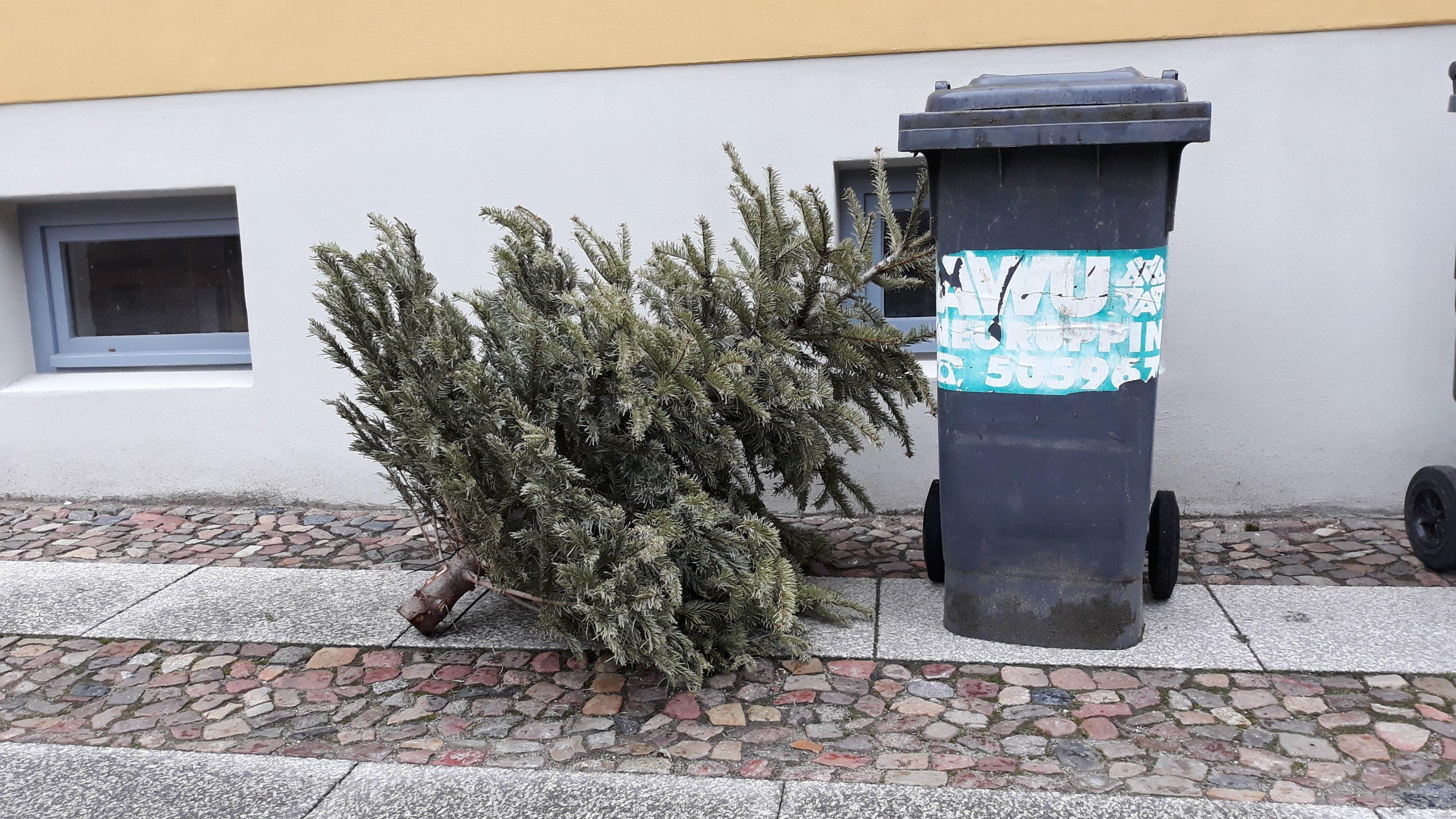 Ein vertrockneter, aber immer noch immergrüner Weihnachtsbaum  steht neben einer Mülltonne auf dem Gehweg und wartet auf das Müllauto. Die meisten Weihnachtsbäume werden thermisch entsorgt, also verbrannt