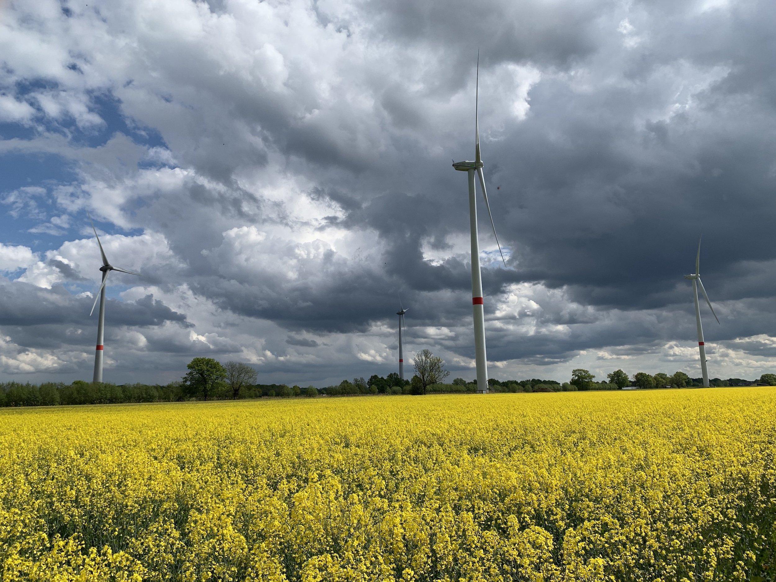 Einige Windräder über einem blühenden Rapsfeld, das in der Sonne leuchtet, und vor einem dramatischen Himmel mit dunklen Wolken: Der Windpark in Hamburg-Neuengamme