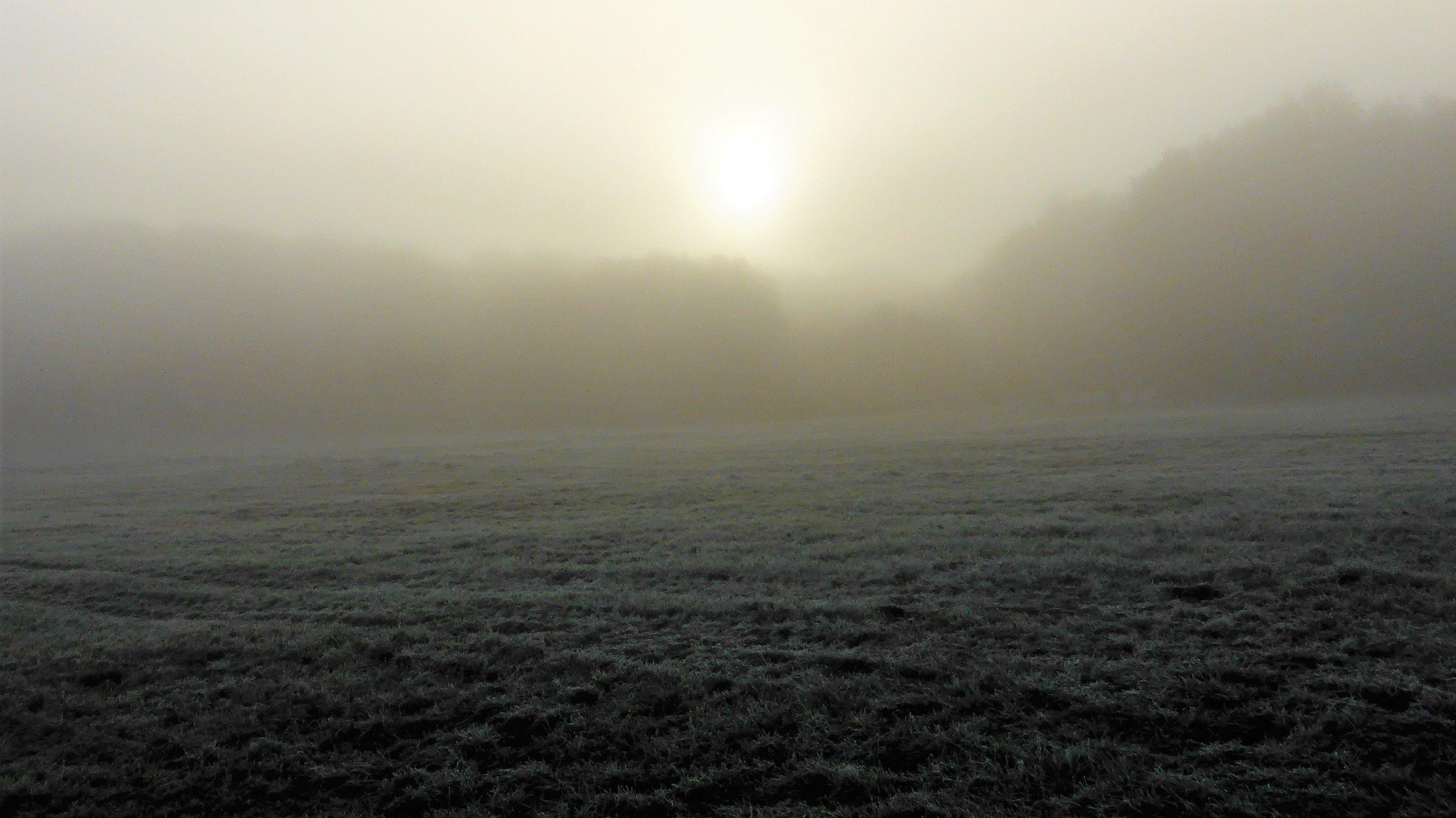 Sonne hinter einer Nebelbank auf einer Waldlichtung.