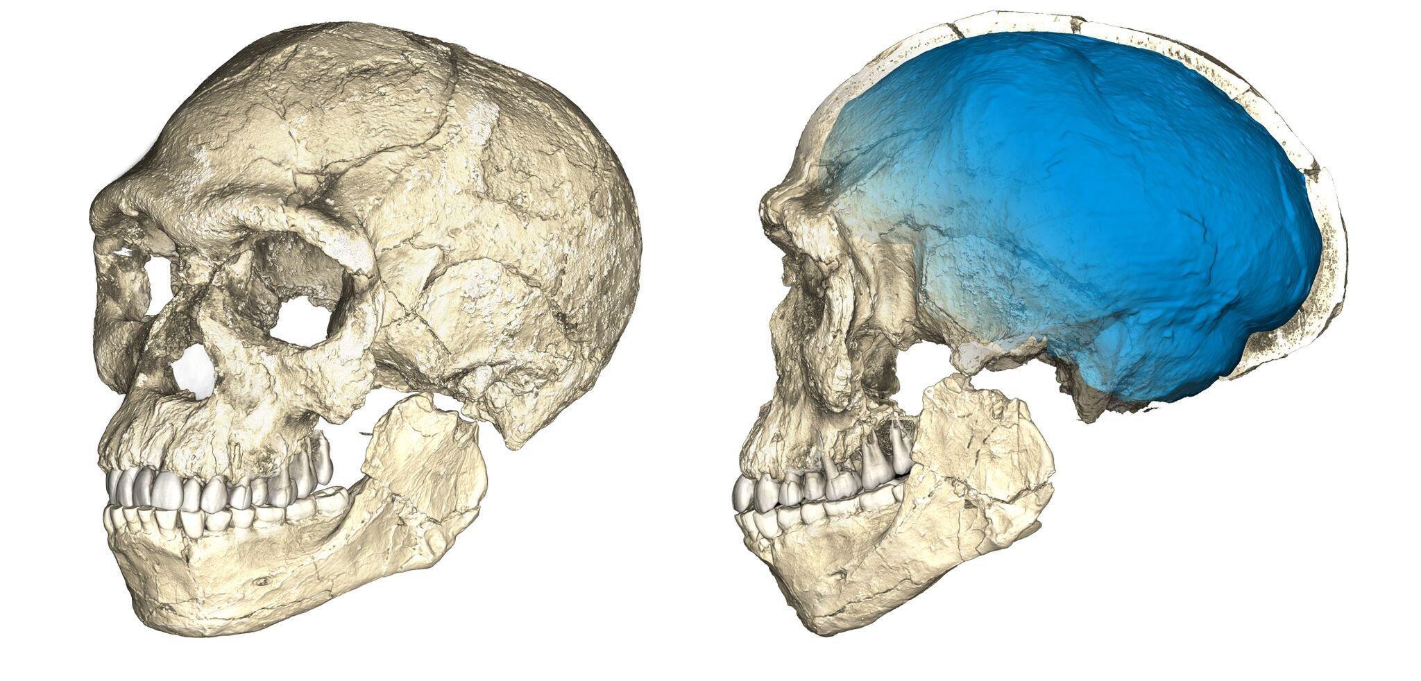 Forscher des Max-Planck-Instituts für evolutionäre Anthropologie in Leipzig rekonstruierten den schon länger bekannten Schädelfund von Jebel Irhoud in Marokko als Modell im Computer. Anhand der Rekonstruktion konnten sie zeigen, dass der Schädel eindeutig zu einem Homo sapiens gehört, also um einen Vertreter unserer eigenen Art. Zudem datierten die Forscher den Fund mit neuen Methoden und kamen auf ein überraschendes Ergebnis: Der älteste Homo sapiens lebte bereits vor 300.000Jahren.