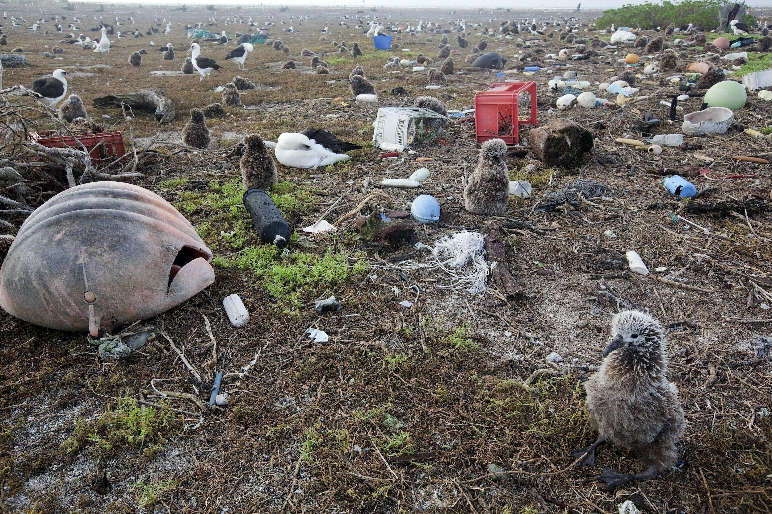 Flauschige braune Küken sitzen zwischen Müll aus Plastik, darunter eine rote Bierkiste, eine schwarze Plastikflasche, Netzreste und eine große Boje.