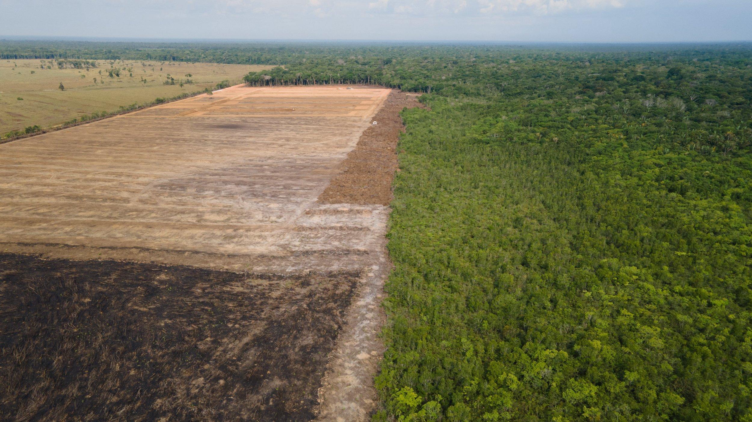 Ein Landschaft, von der die linke Hälfte abgebrannt braun ist und die rechte Hälfte grüner Regenwald.