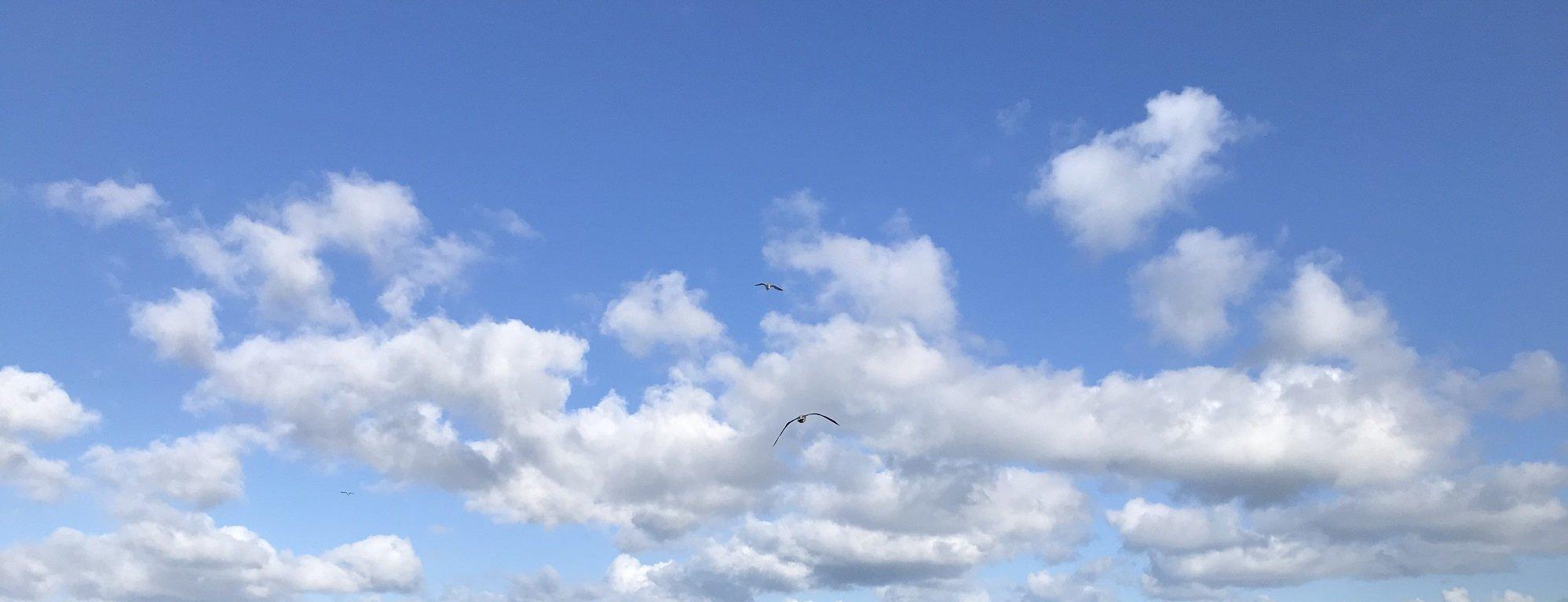 Kleine weiße Wolken vor strahlend blauem Himmel. in der MItte zwei Möwen.