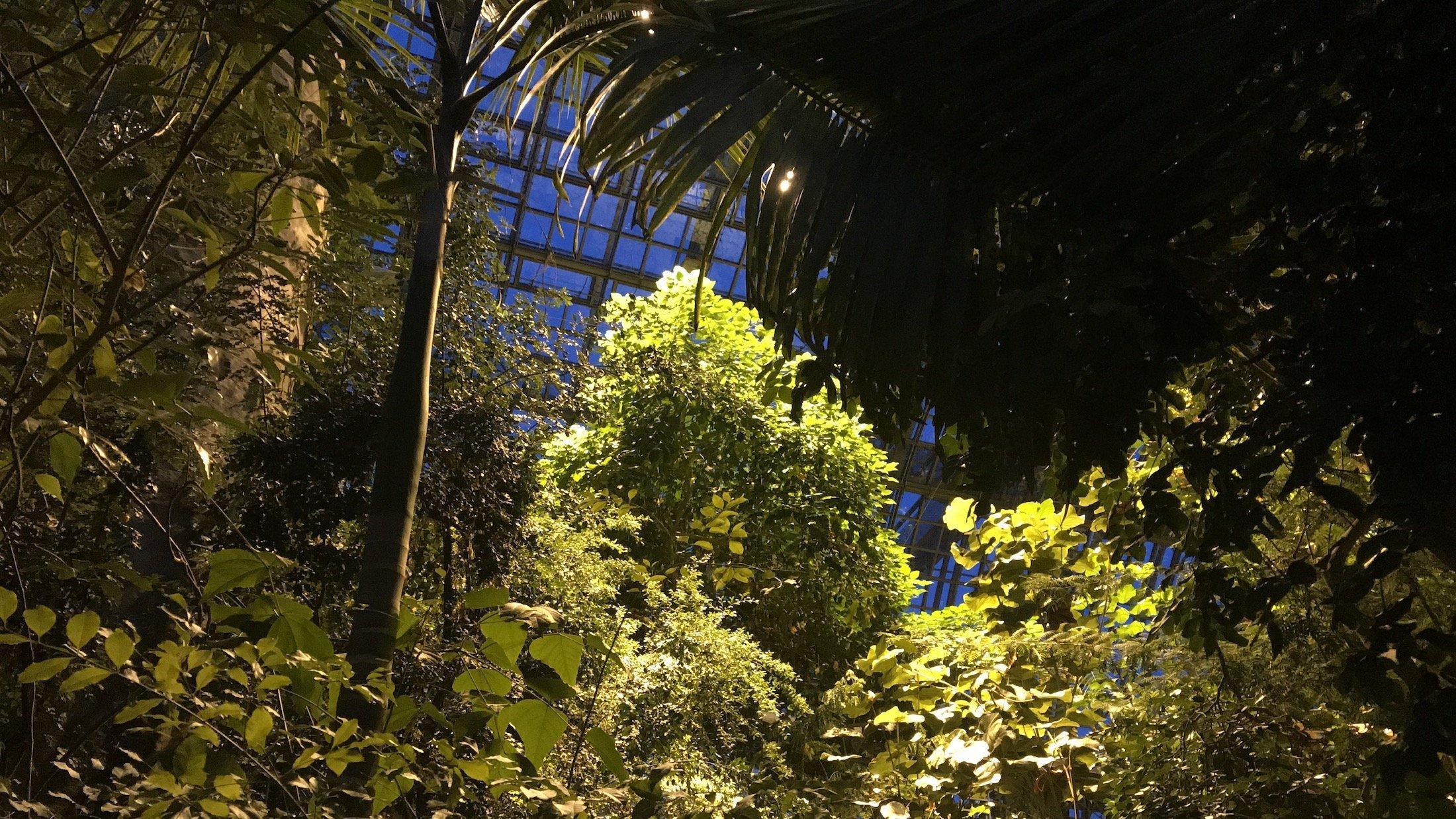 Verschiedene Pflanzen, Botanischer Garten Berlin