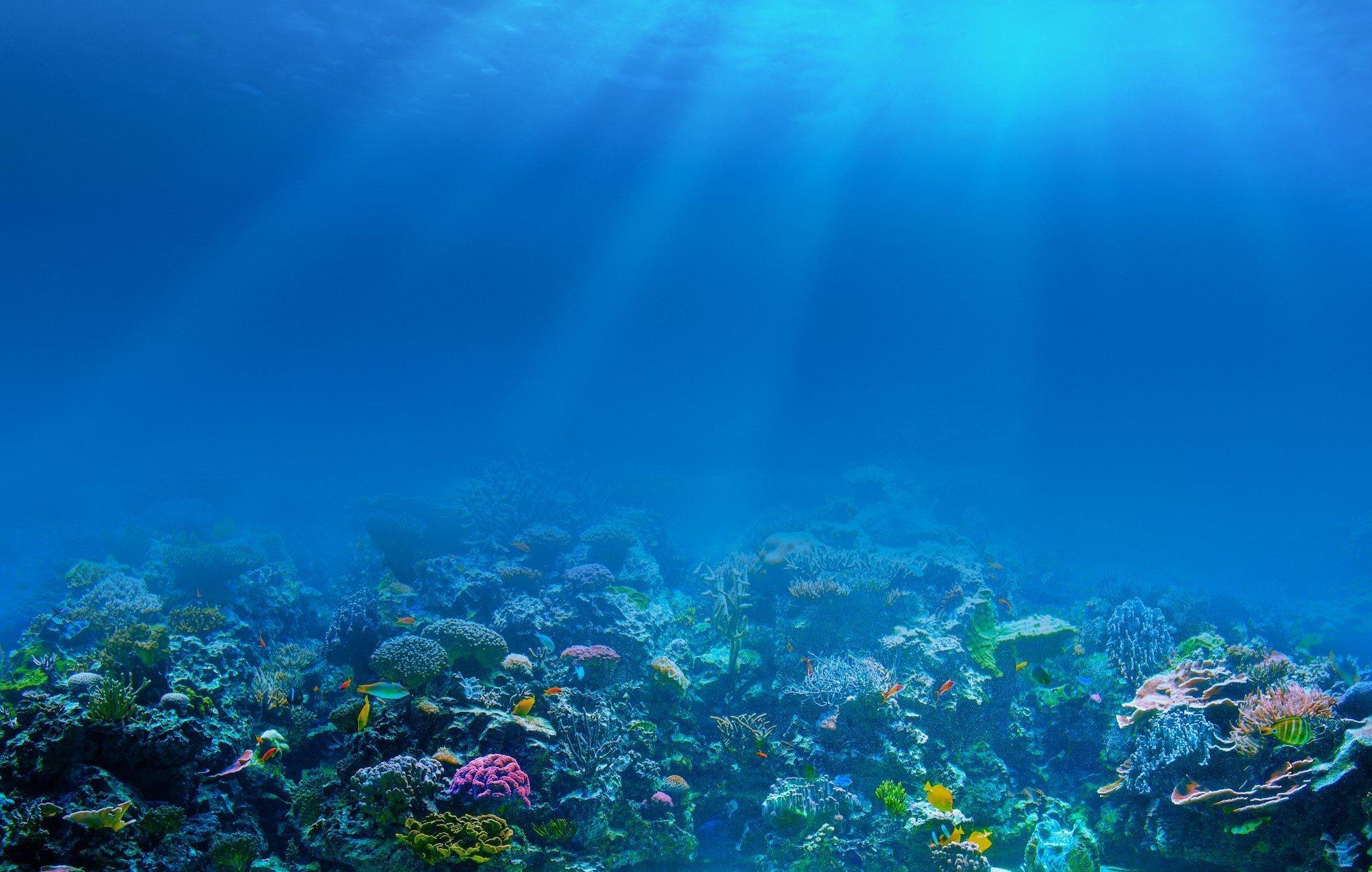 Unterwasseraufnahme eines Korallenriffs.