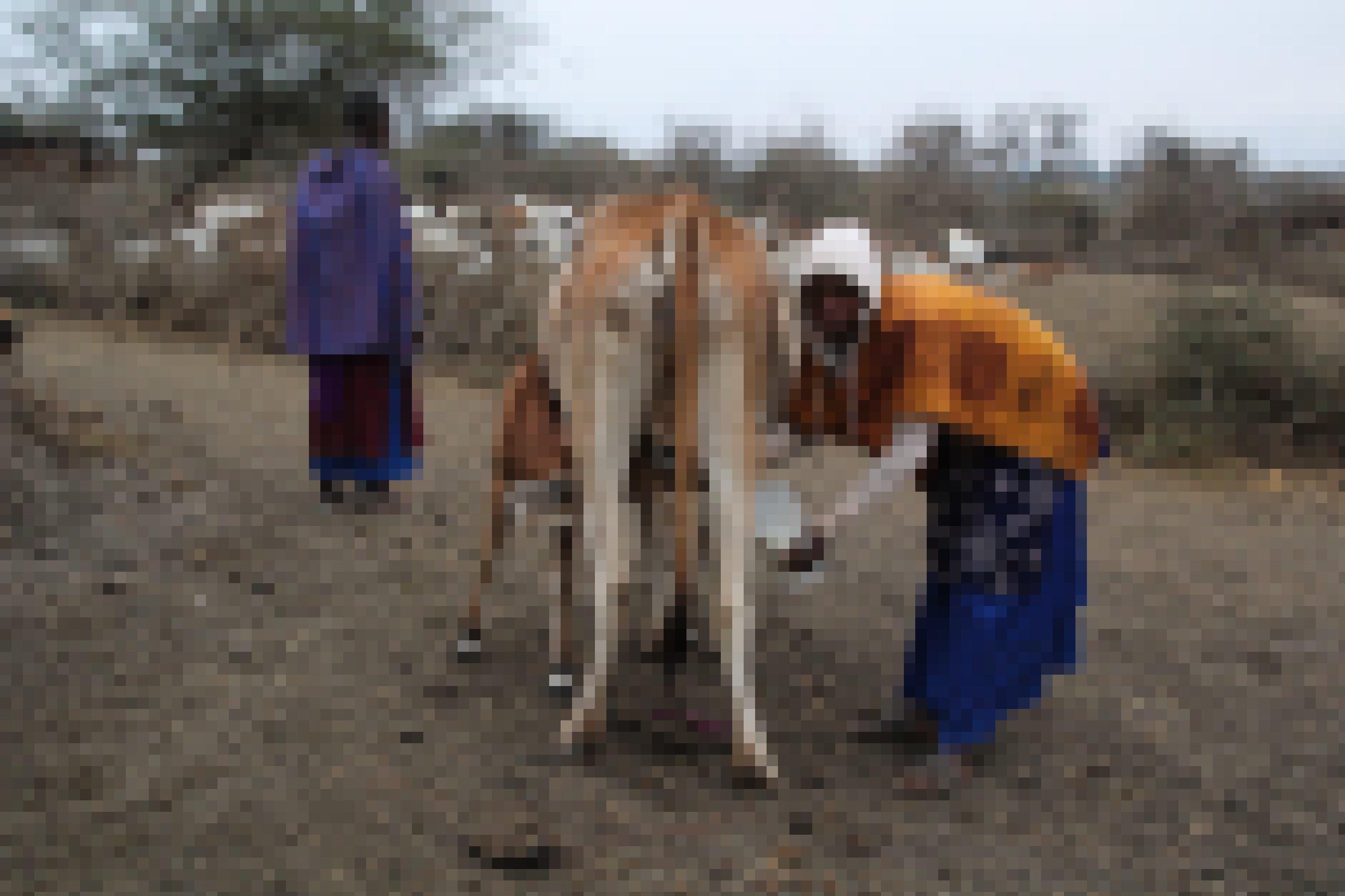 Das Foto zeigt eine Frau, die ihre Kuh mit der Hand melkt