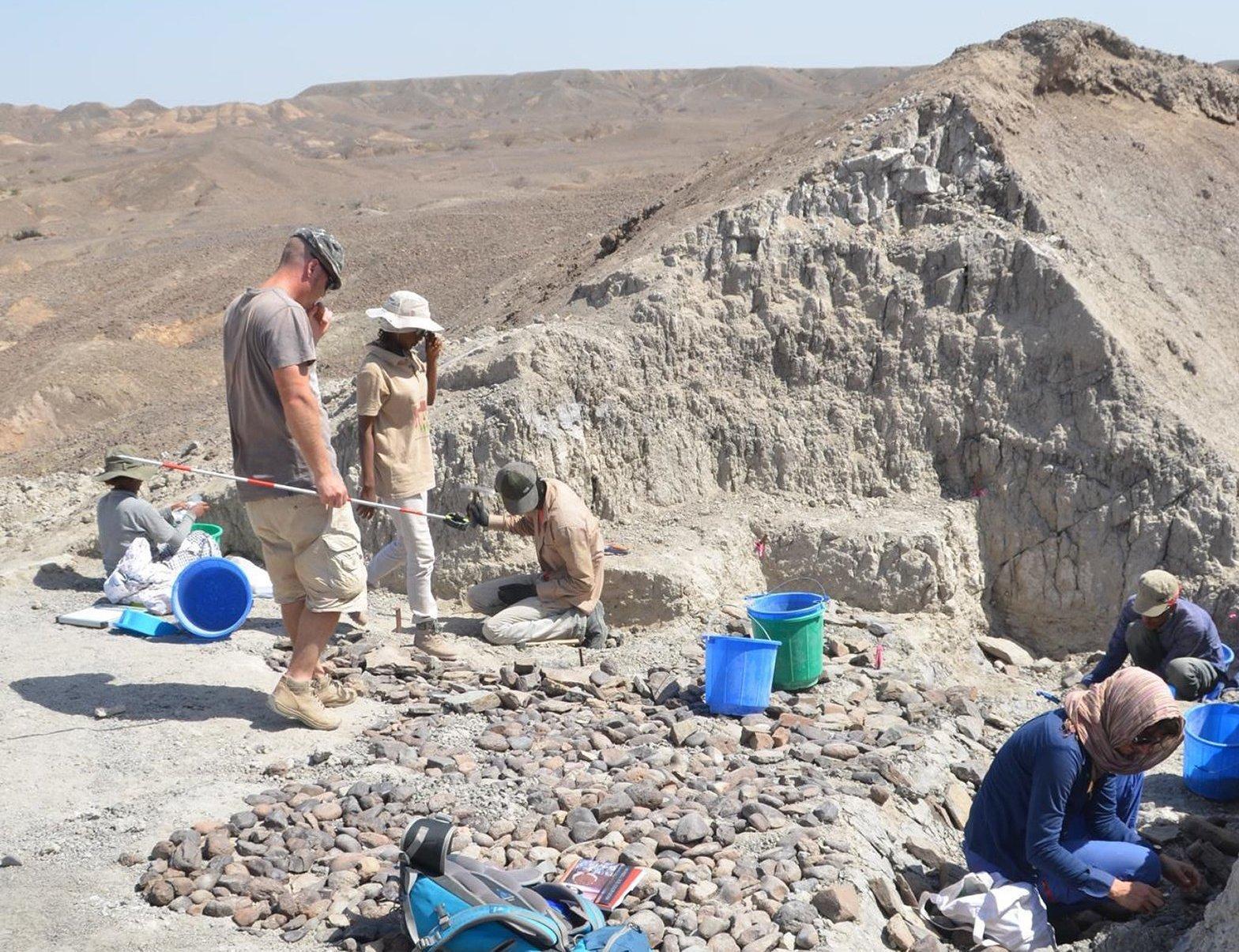 In der Wüste Äthiopiens, in der Ausgrabungsstätte Bokol Dora, suchen Mitarbeiter eines internationalen Forscherteams nach menschlichen Spuren. Im Sand der Sedimente entdeckten sie Hunderte von kleinen Steinabschlägen sowie fossile Tierknochen. Mit den Steinwerkzeugen zerlegten Frühmenschen einst ihre Beute, glauben die Wissenschaftler. Vor rund 2,6Millionen lag hier das Ufer eines Gewässers.