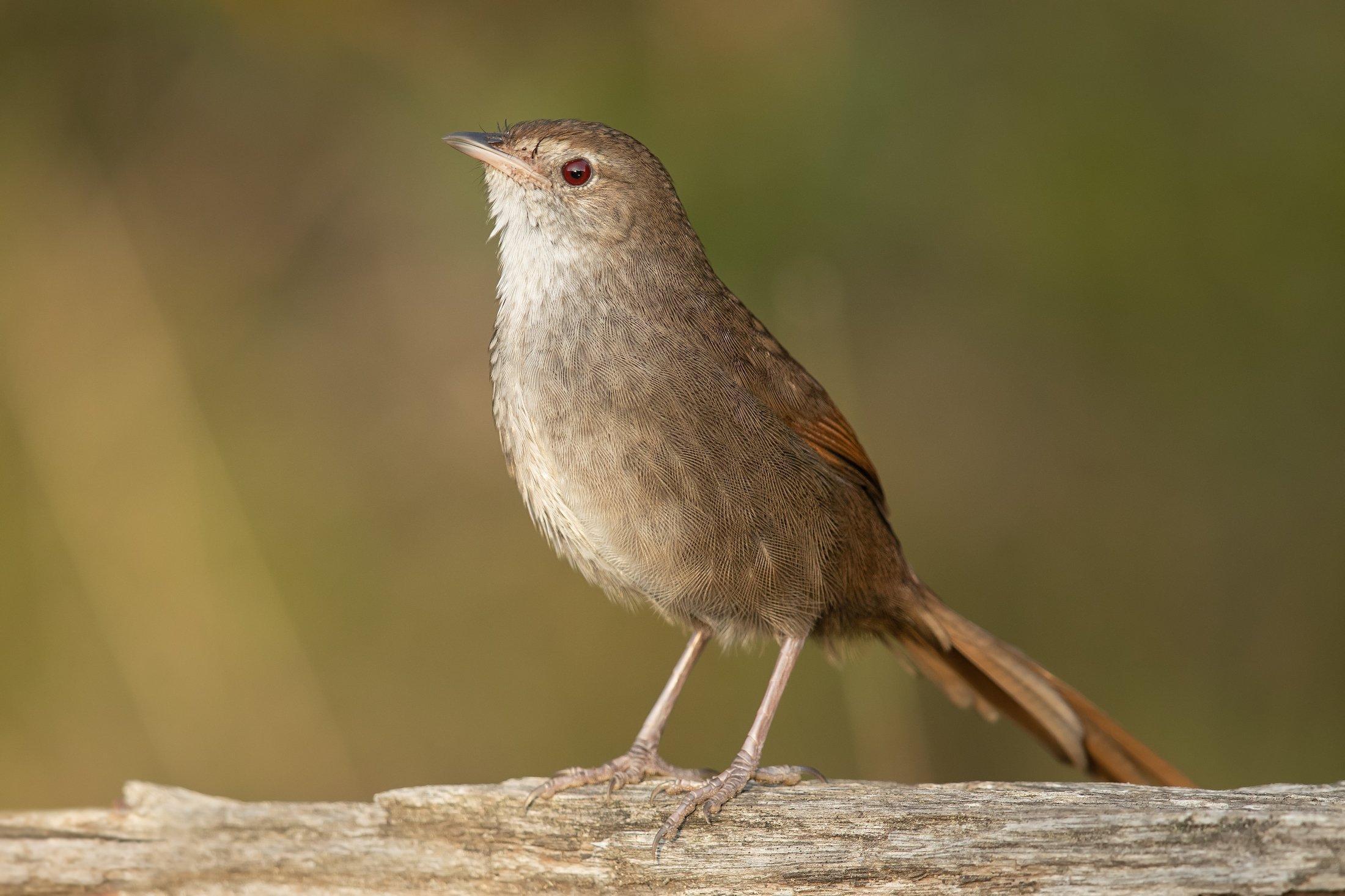 Der Vogel in Nahaufnahme