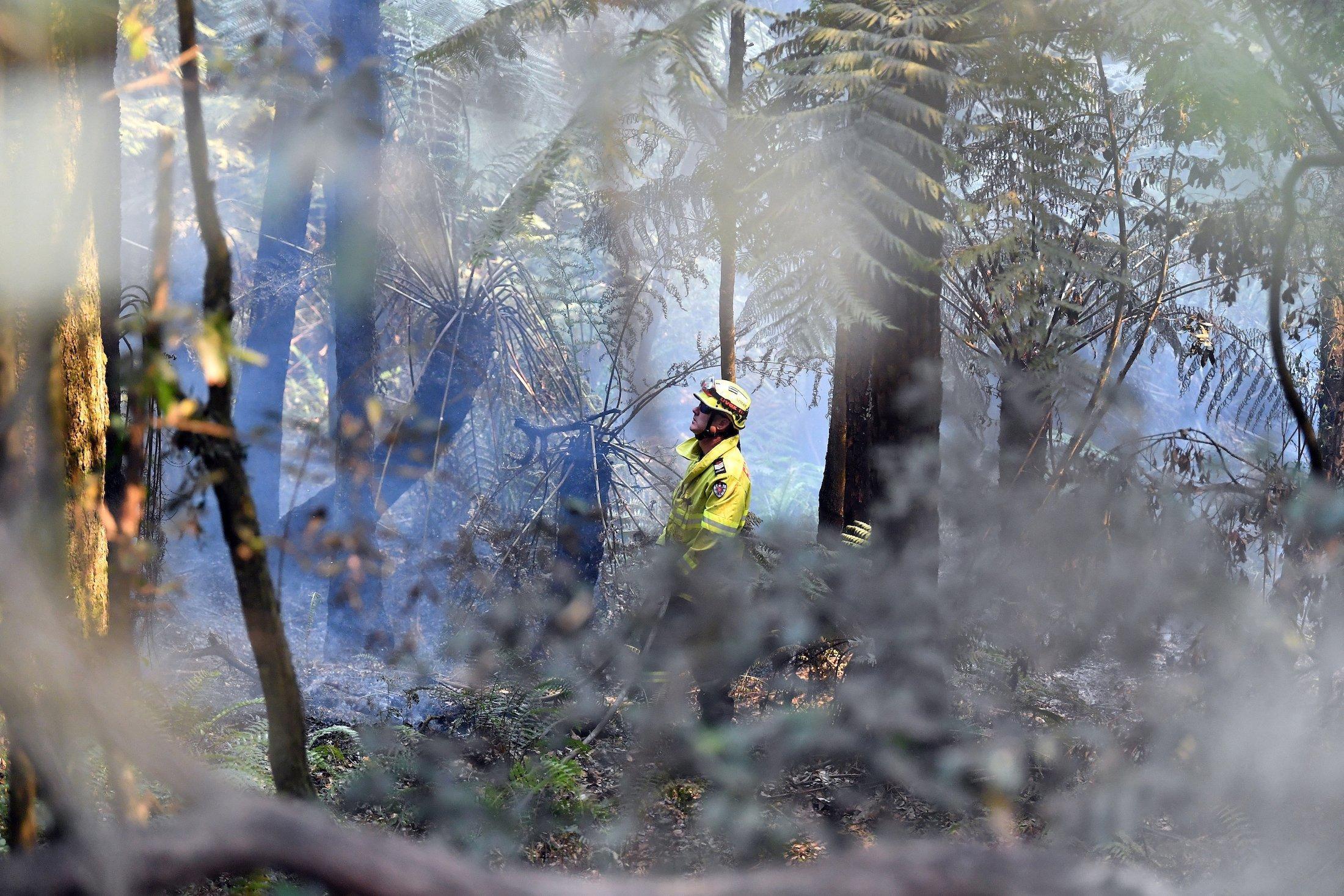 Ein Feuerwehrmann steht mit fragendem Blick in einem verrauchten Wald.