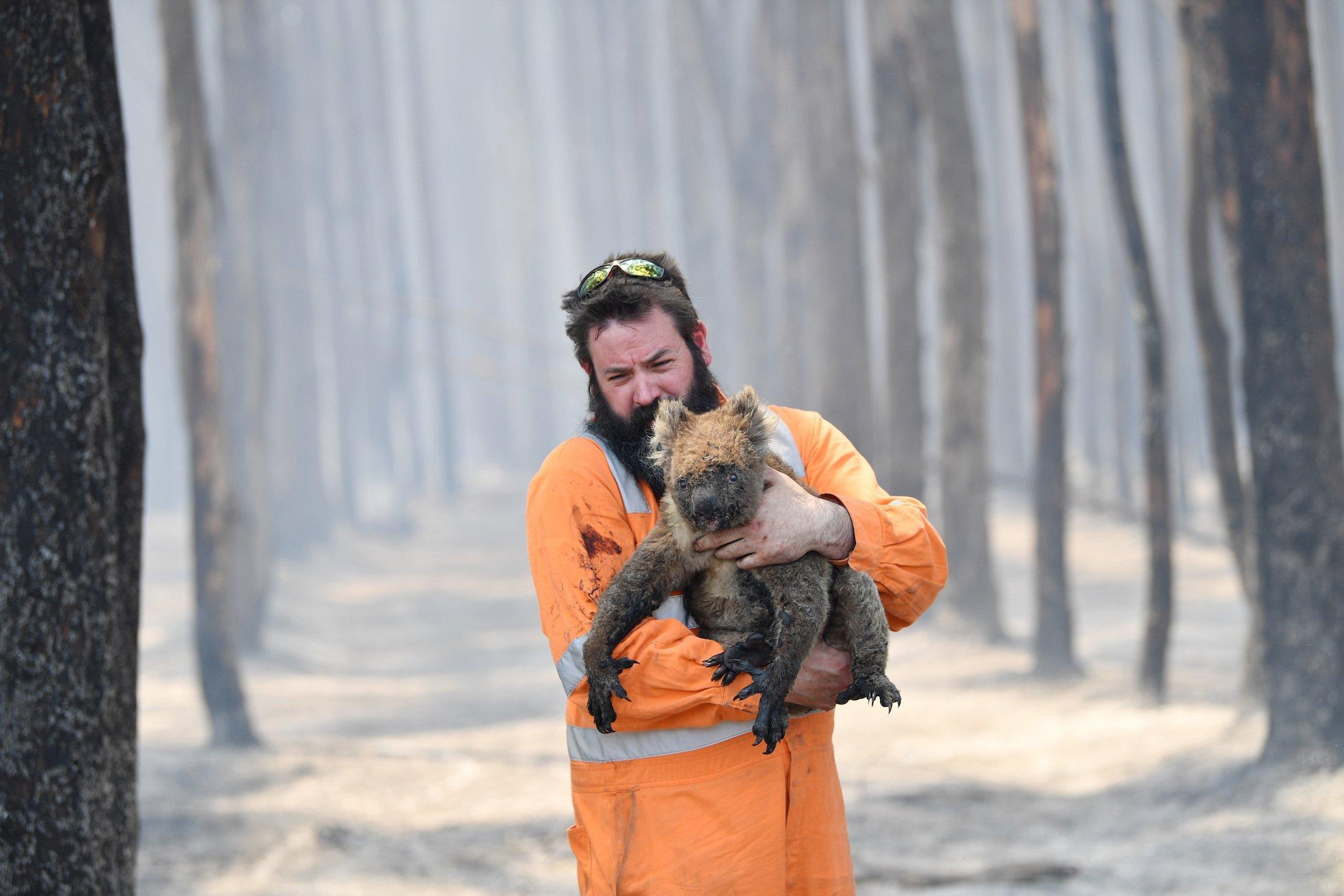 Das Bild zeigt einen bärtigen Mann inmitten eines komplett abgebrannten Waldes, der einen verletzten Koala in seinen Armen hält und zu retten versucht. Beide wirken verzweifelt.