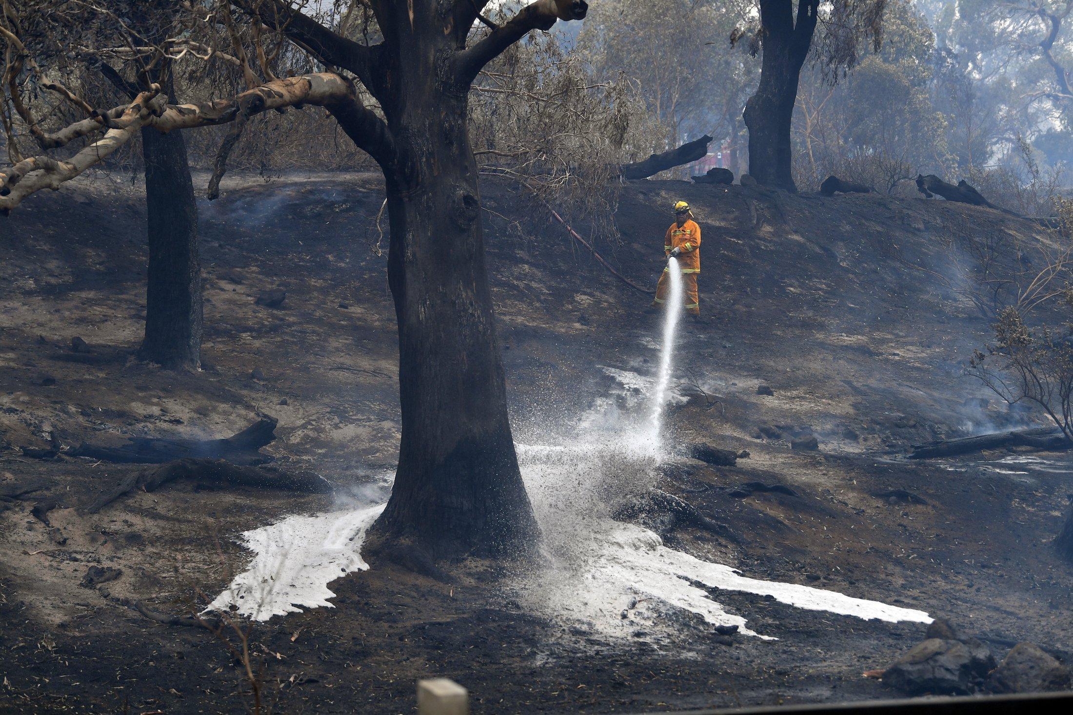 Das Bild zeigt einen hellorgane gekleideten Feuerwehrmann in einer verkohlten Waldlandschaft. Er hat einen Löschschlauch in der Hand und spritzt Wasser und eventuell brandverzögernde Chemikalien in die Landschaft.