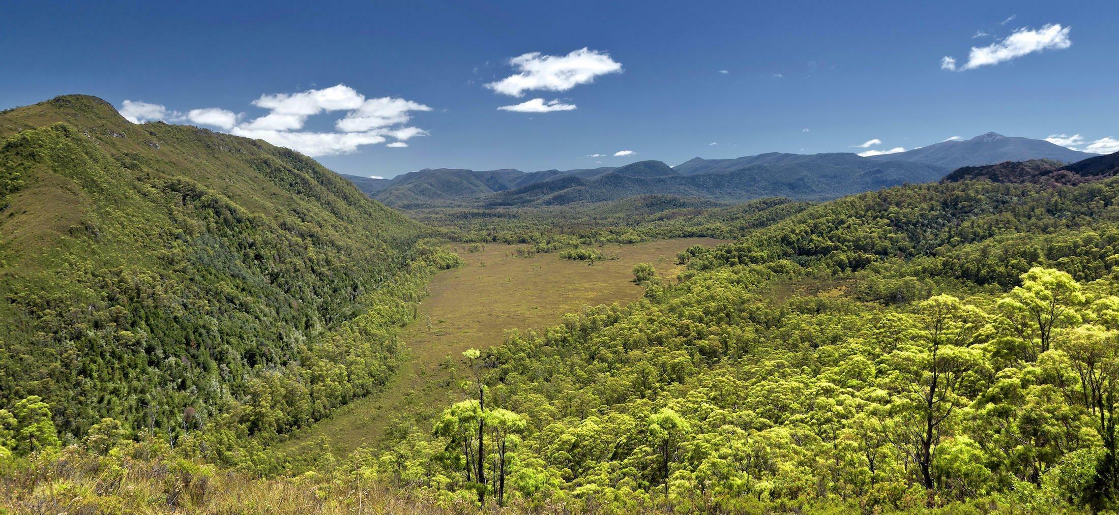 Das sattgrüne Bild zeigt eine hügelige Regenwaldlandschaft mit einer großen Lichtung in der Mitte bei sonnigem Wetter.
