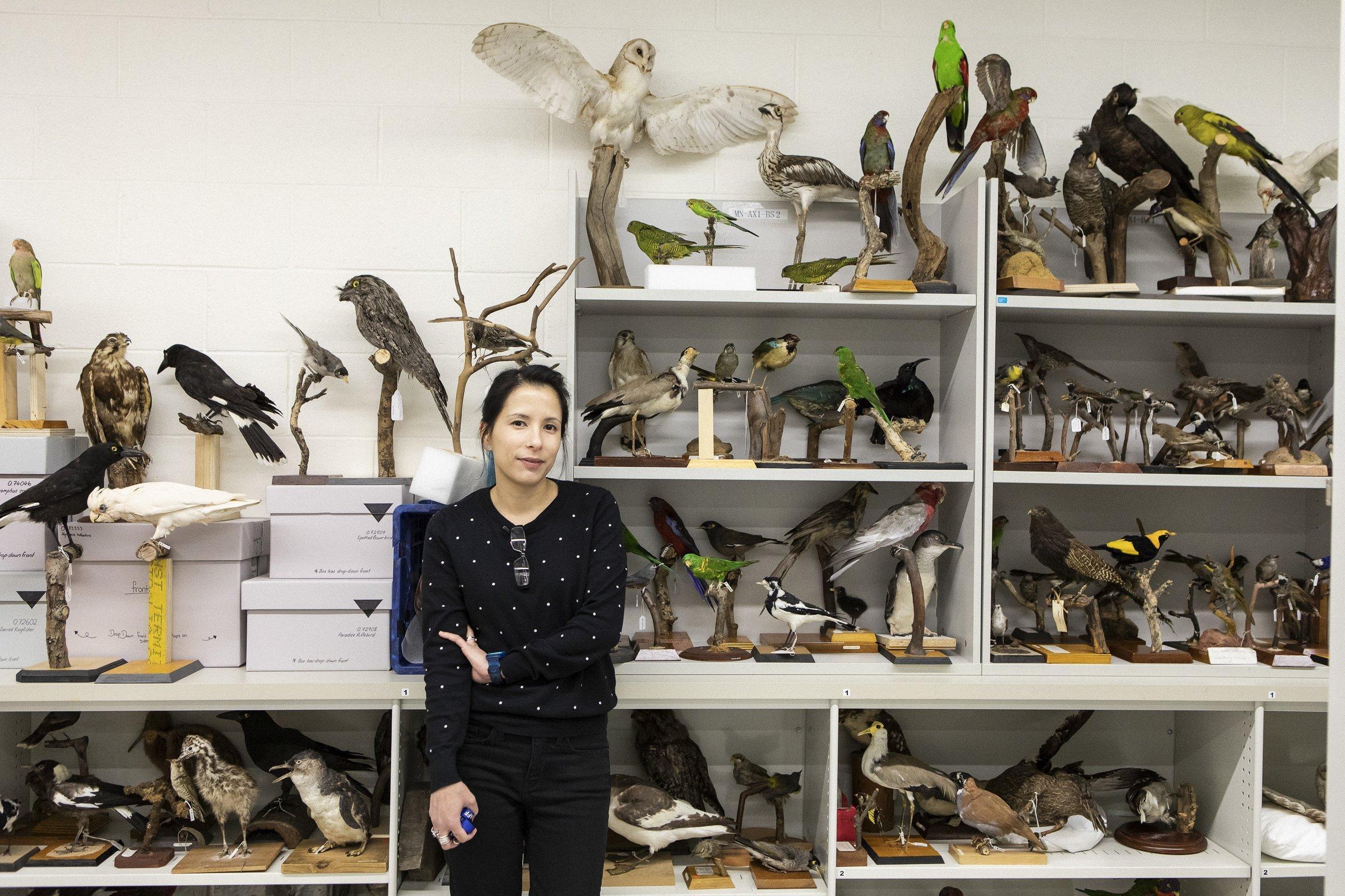 Leah R. Tsang, Ornithologin am Australian Museum in Sydney vor einer Wand mit verschiedensten Vogelpräparaten in der naturkundlichen Sammlung ihrer Institution.