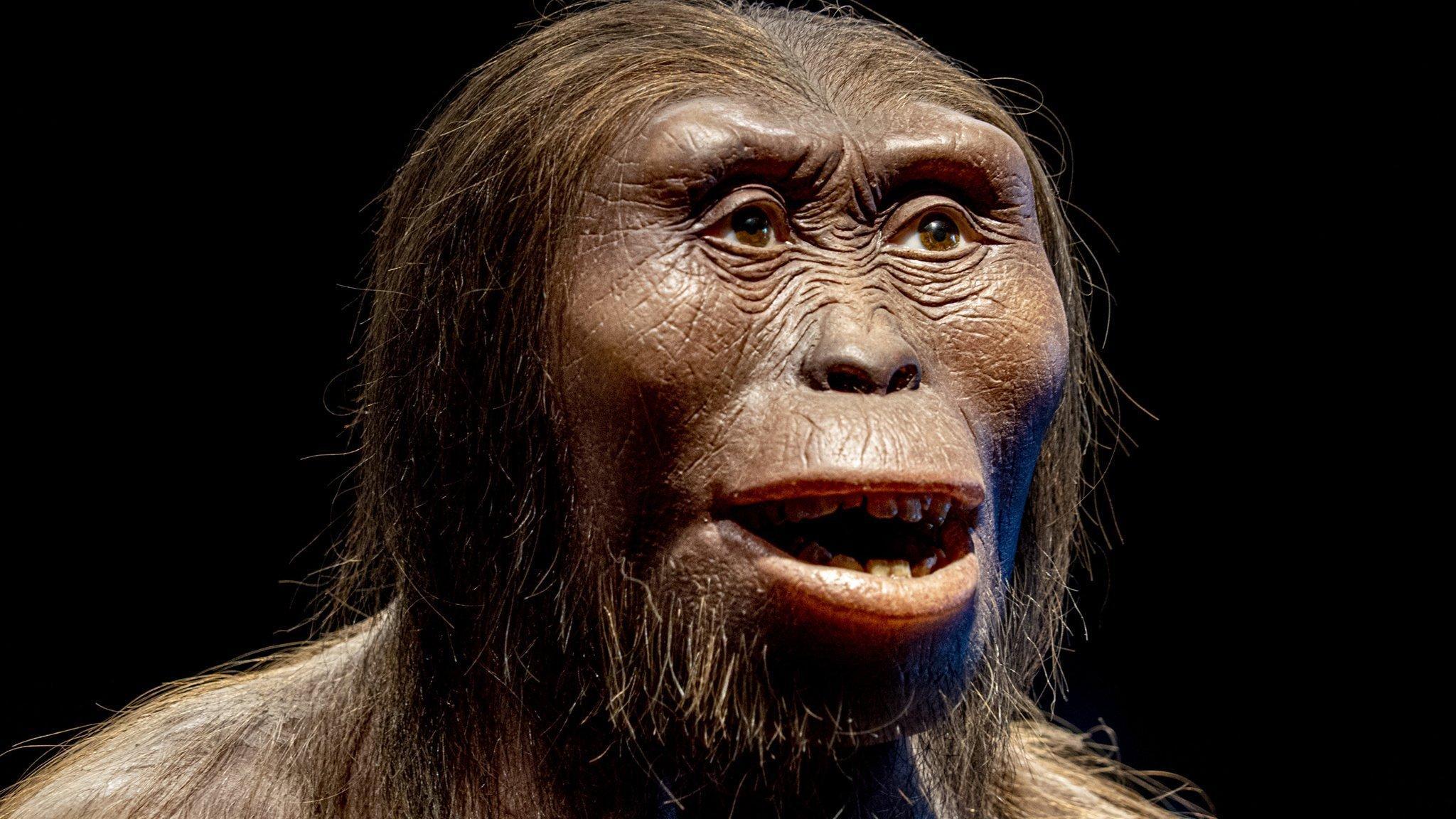 Gezeigt wird die Plastik eines Kopfes mit dunkler Hautfarbe, einer platten Nase, breiten, hervortretenden Wangenknochen, dicken Wülsten über den braunen Augen und weiten Lippen. Das Gesicht ähnelt einer Mischung zwischen Schimpanse und Mensch. Die glatten; schwarzen Haare gehen vom Scheitel zur Seite des Kopfes weg, unter dem Kinn ist langer Bartwuchs zu erkennen.