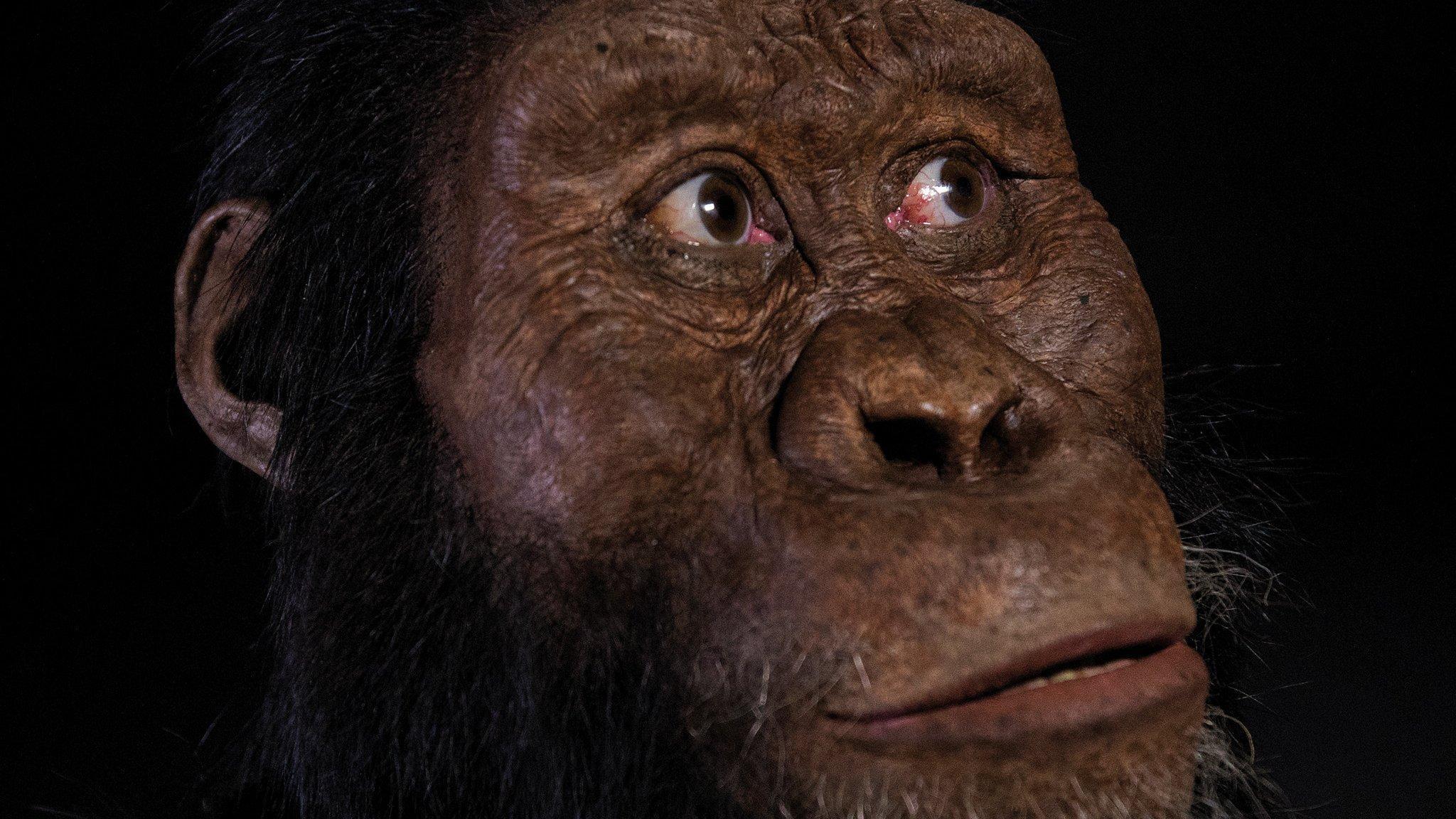 Das Bild zeigt das rekonstruierte Gesicht des Vormenschen Australopithecus anamensis, das wie ein Mischwesen zwischen Affe und Mensch aussah. Die Rekonstruktion hat der Paläo-Artist John Gurche vorgenommen