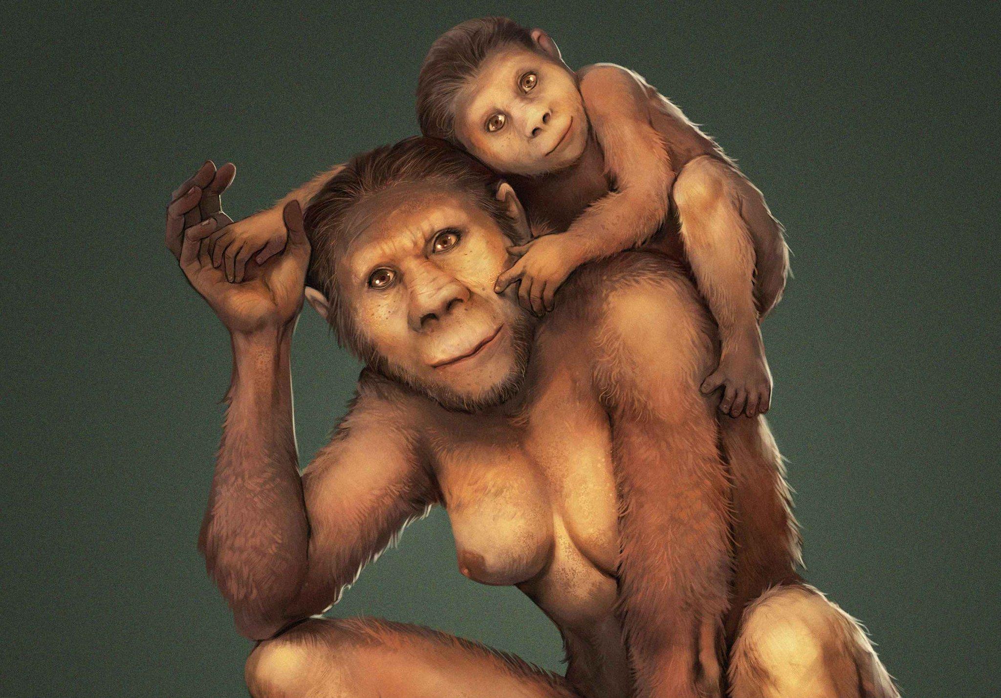 Auf dieser Zeichnung ist eine Mutter der Vormenschen-Art Australopithecus africanus zu sehen, die ihr Kind auf der linken Schulter trägt. Anhand von Zahnanalysen fanden Forscher heraus, dass die Mütter dieser Art ihre Kinder etwa ein Jahr lang stillten, ihnen aber auch später noch in Notzeiten Milch gaben