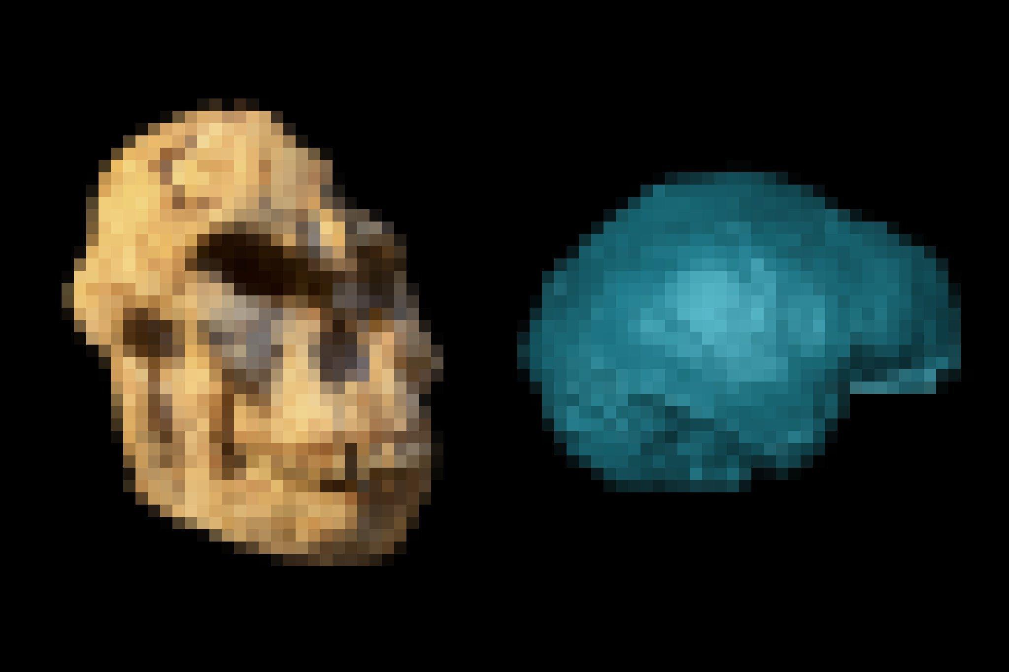 Links ist ein versteinerter, etwas verformter Schädel mit großen, vorstehenden Kieferpartien, Knochenwülsten über den Augen zu sehen, rechts die blau eingefärbte Darstellung eines Gehirnabgusses.