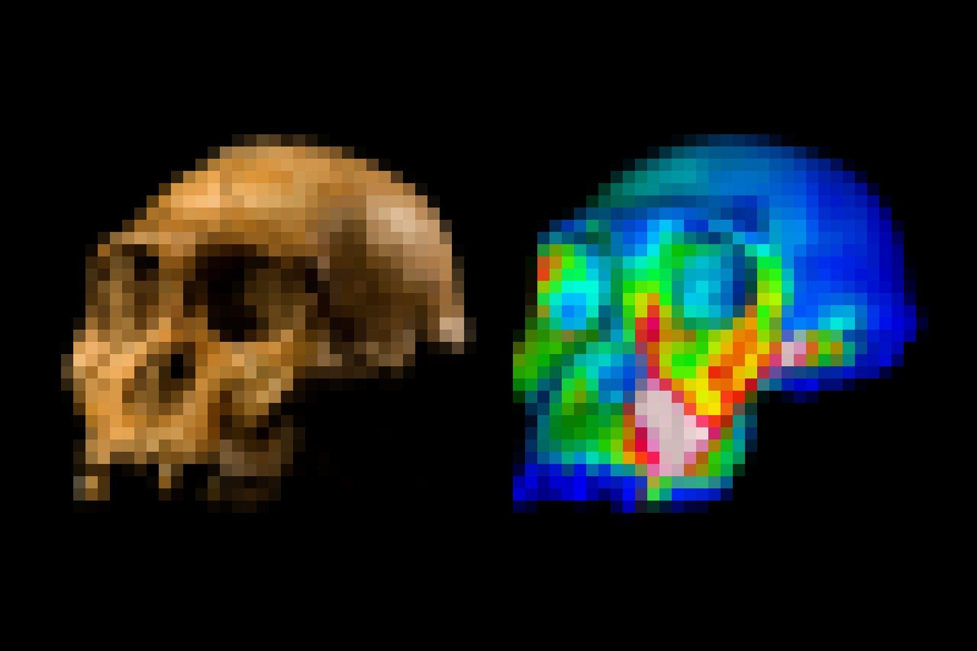 Links ist ein fossiler Schädel ohne Unterkiefer zu sehen, halb von vorne und halb von der linken Seite gezeigt. Rechts daneben findet sich eine simulierte Darstellung desselben Schädels, in dem verschiedene Bereiche farbig dargestellt sind: Der Hirnschädel etwa dunkelblau, das Gesicht überwiegend grünlich, über den Vorbackenzähnen sowie dem Wangenknochen jedoch gelb und rot.