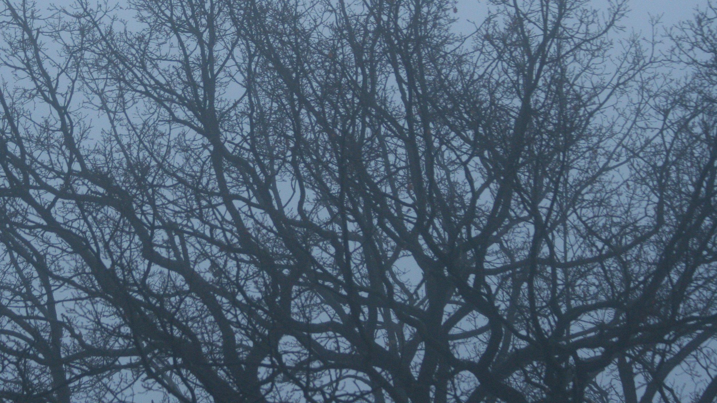 Zu sehen ist die im Nebel unscharfe, ausladende Krone eines Laubbaumes, der im Winter keine Blätter trägt. Lange Zeit galten Bäume als Symbole für die menschliche Abstammung, doch heute wissen die Forscher, dass die Evolution wohl eher einem Flussdelta ähnelt, bei dem sich Arme verzweigen, aber auch wieder vereinigen.
